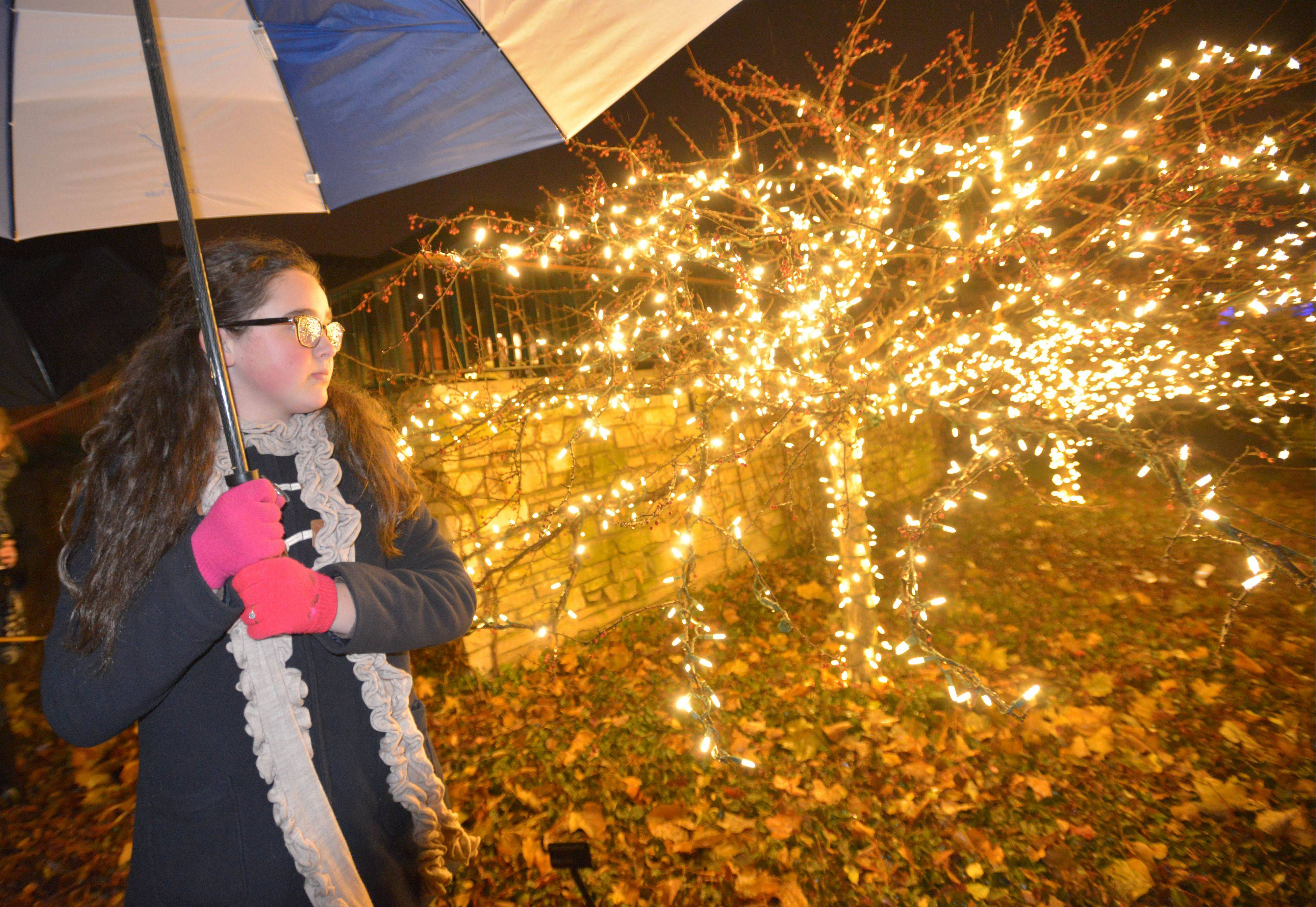 "Grace Weidenbach,11, of Naperville looks at the Tree Lights Thursday at The Morton Arboretum during ""Illumination,"" an interactive light event."