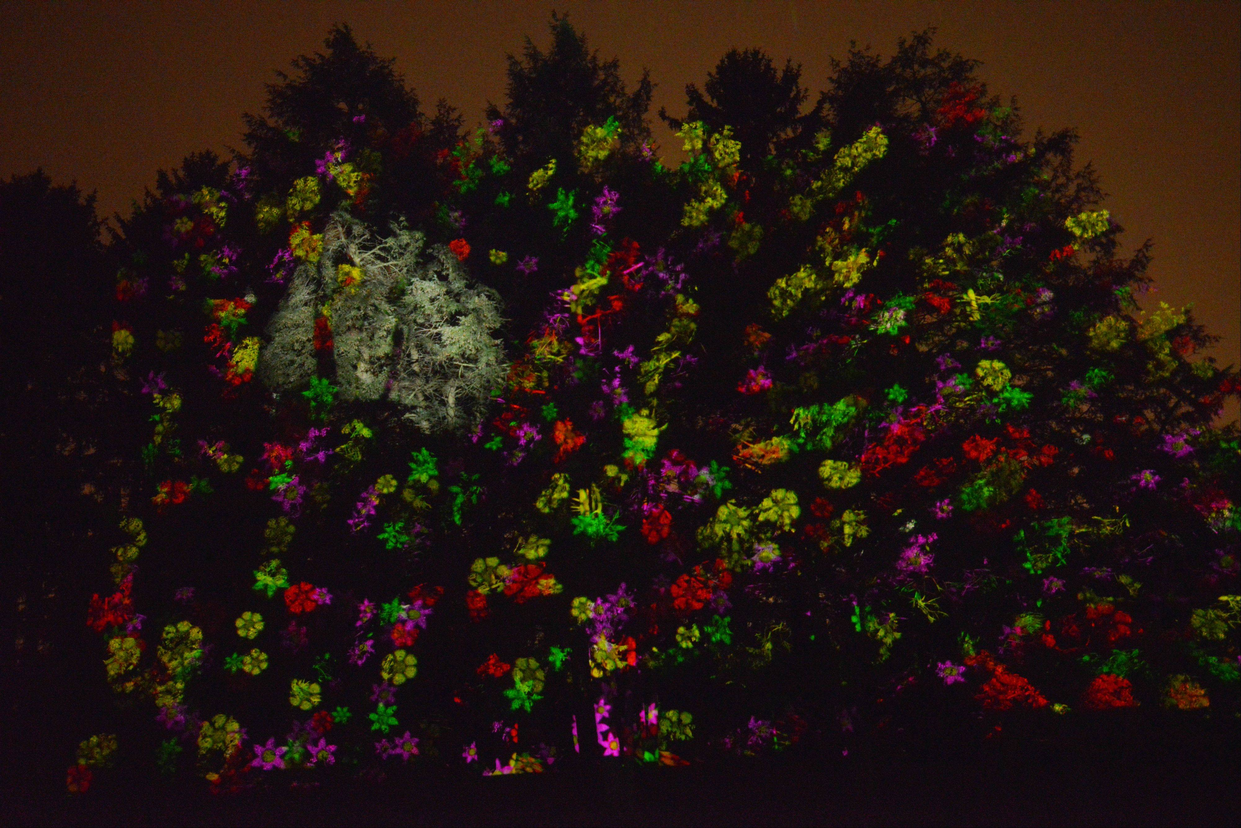 "Paul Michna/pmichna@dailyherald.comMorton Arboretum unveils ""Illumination: Tree Lights at The Morton Arboretum,"" an interactive light event that will be open 4:30 to 8:30 p.m. Nov. 22 to Jan. 4 (closed Nov. 28, Dec. 2, 9, 16, 24 and 25). Along a 1-mile, paved trail, visitors will be able to hug a tree and make it grow bright, sing to a tree and watch it change color, and create their own light show."