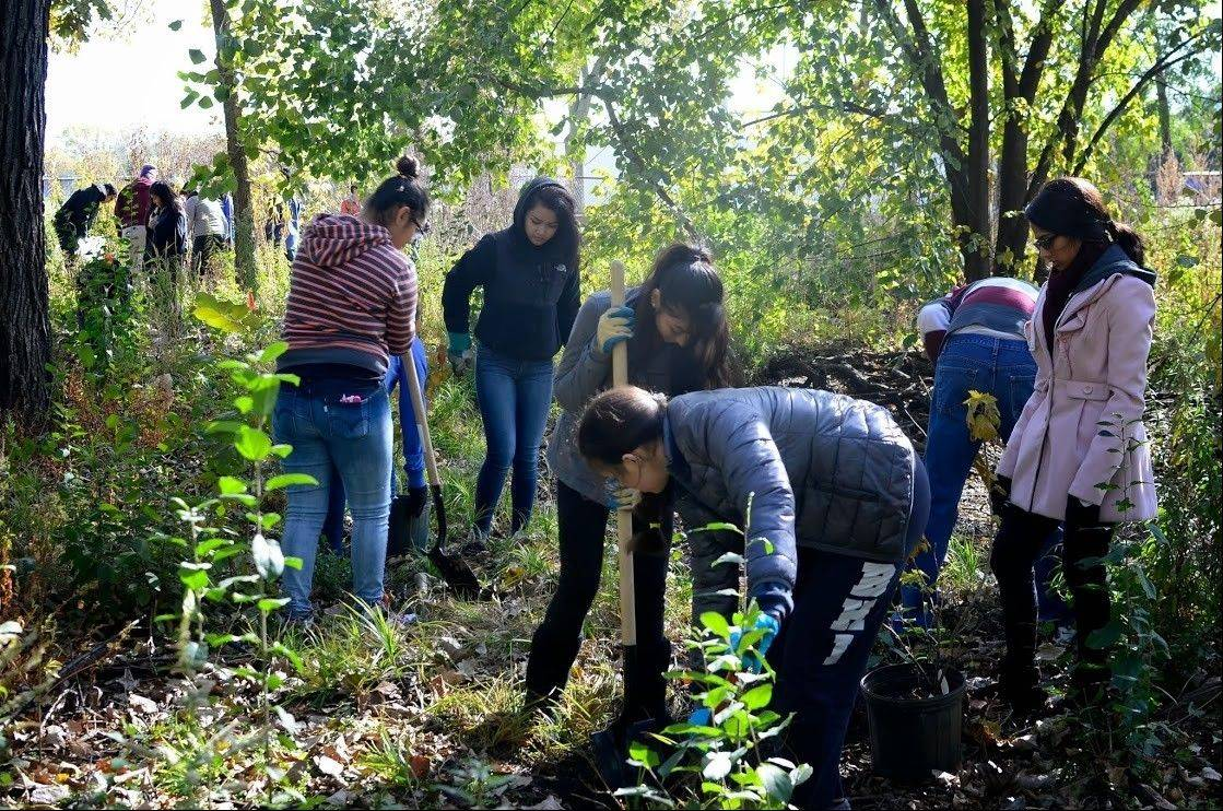 Members of the Maine East Ecology Club volunteer on a Saturday to help to restore the habitat in the Maine East Oak Savanna. Thanks to the students, resident birds and other wildlife received a home makeover.