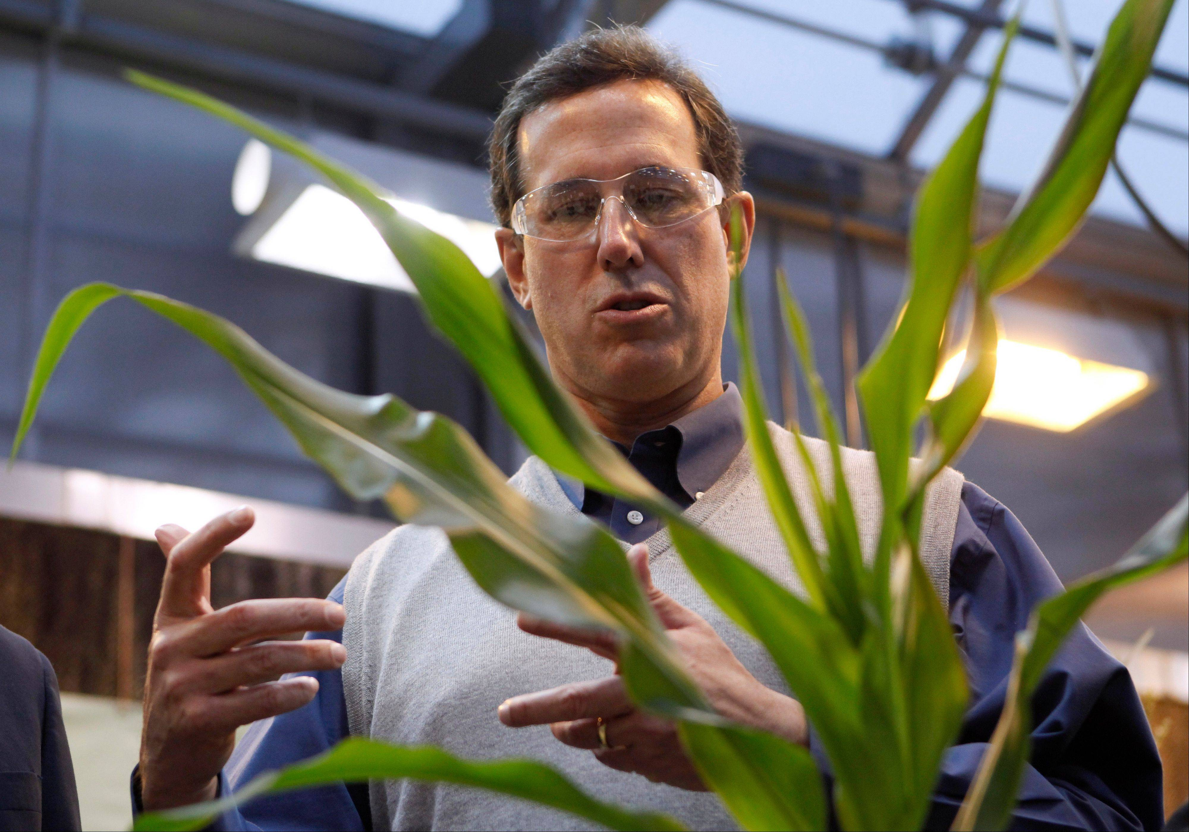 Republican presidential candidate and former Pennsylvania Sen. Rick Santorum looks at corn plants during a tour of Pioneer Hi-Bred Carver Center in Johnston, Iowa, in this Dec. 14, 2011, file photo. Santorum called for ending federal support for the ethanol industry before he won the Iowa caucuses the following month.