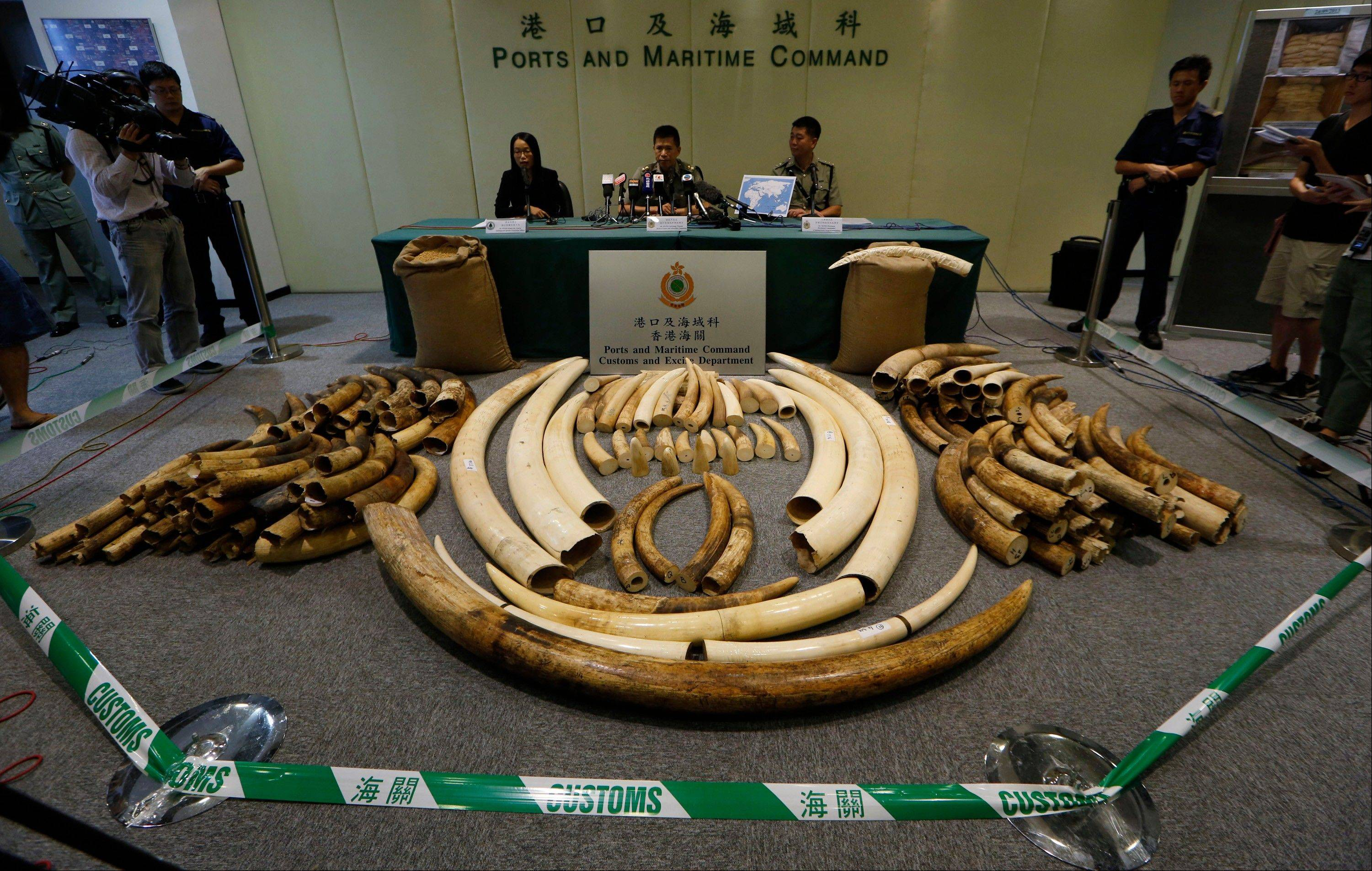 #lephant tusks are displayed after being confiscated by Customs in Hong Kong. The latest shipment, 189 tusks worth $1.5 million hidden in soybean sacks in a shipping container, was one of four major busts this year. Ivory is known as �white gold� because of the rich prices it commands on the black market. Hong Kong has put values of between $1,000 and $2,000 a kilogram on ivory it seized this year.
