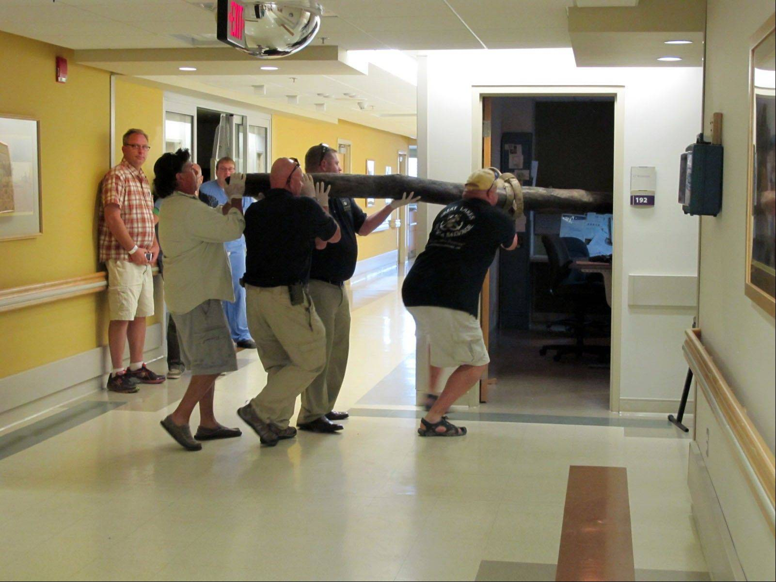 Members of the Great Lakes Exploration Group carry a nearly 400-pound wooden slab into the radiology section of Otsego Memorial Hospital in Gaylord, Mich., for a CT scan to create images of tree rings from its interior, in this photo from Aug. 24.
