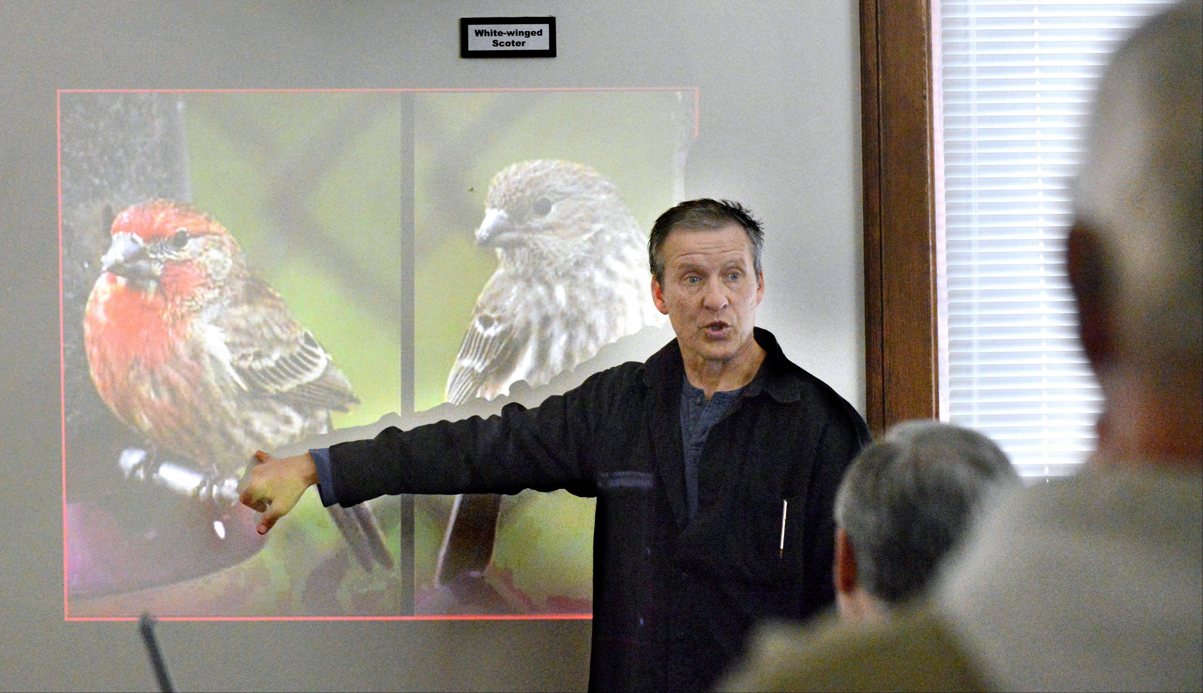 Wildlife biologist and interpretive naturalist Jim McGrath of Nature Discovery shows identifying marks on a male, left, and female red finch during a presentation Saturday at the Elgin Public Museum in Lords Park. McGrath grew up watching birds in Sleepy Hollow.
