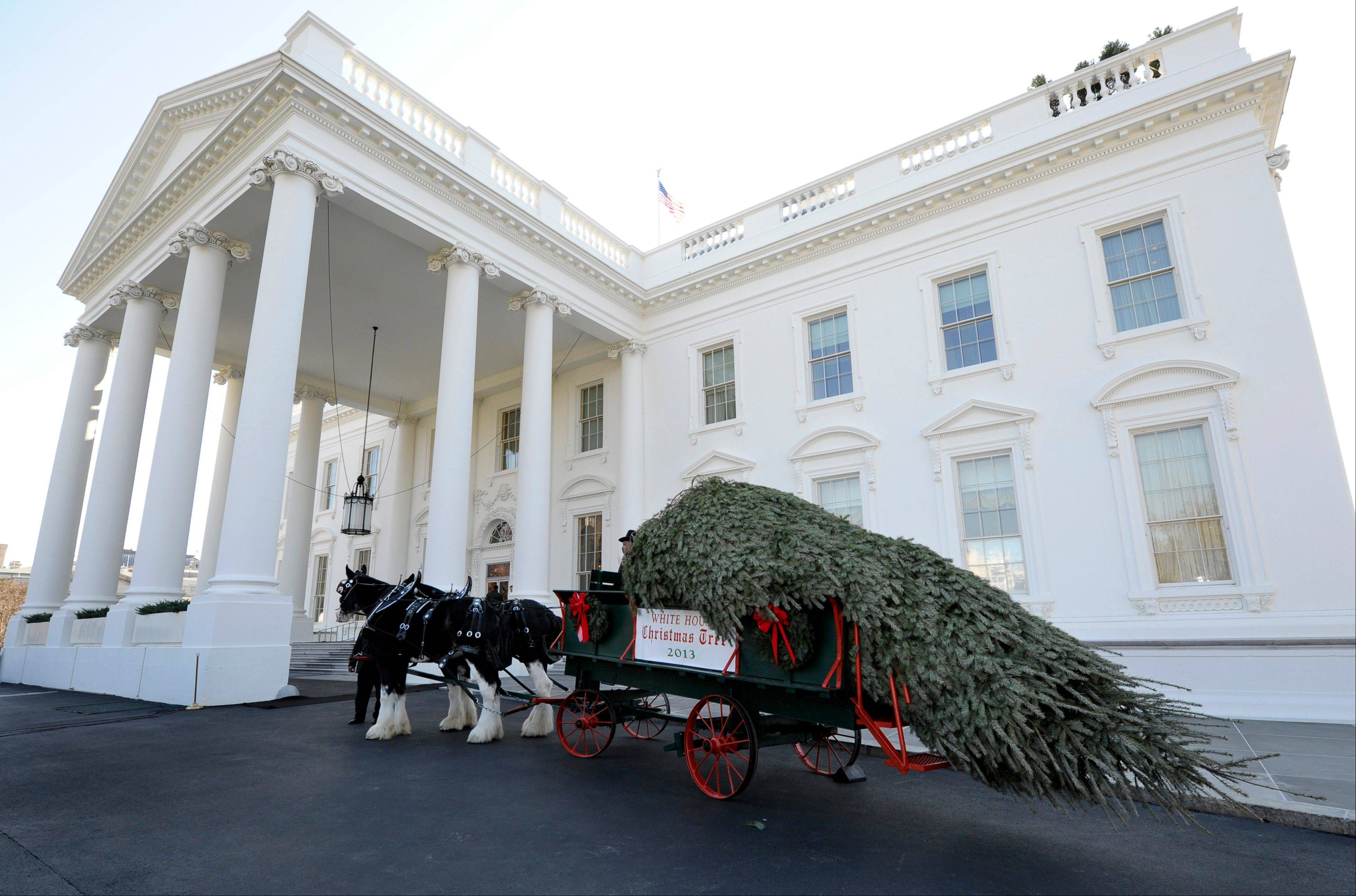 The Official White House Christmas Tree arrives Friday outside the North Portico of the White House? in Washington.