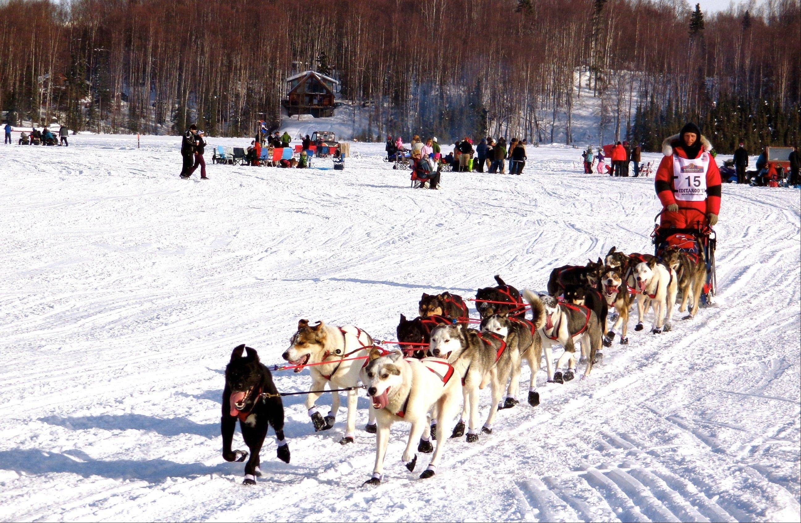 Charley Bejna of Addison competed in three races this year to qualify for the 2014 Iditarod Trail Sled Dog Race.