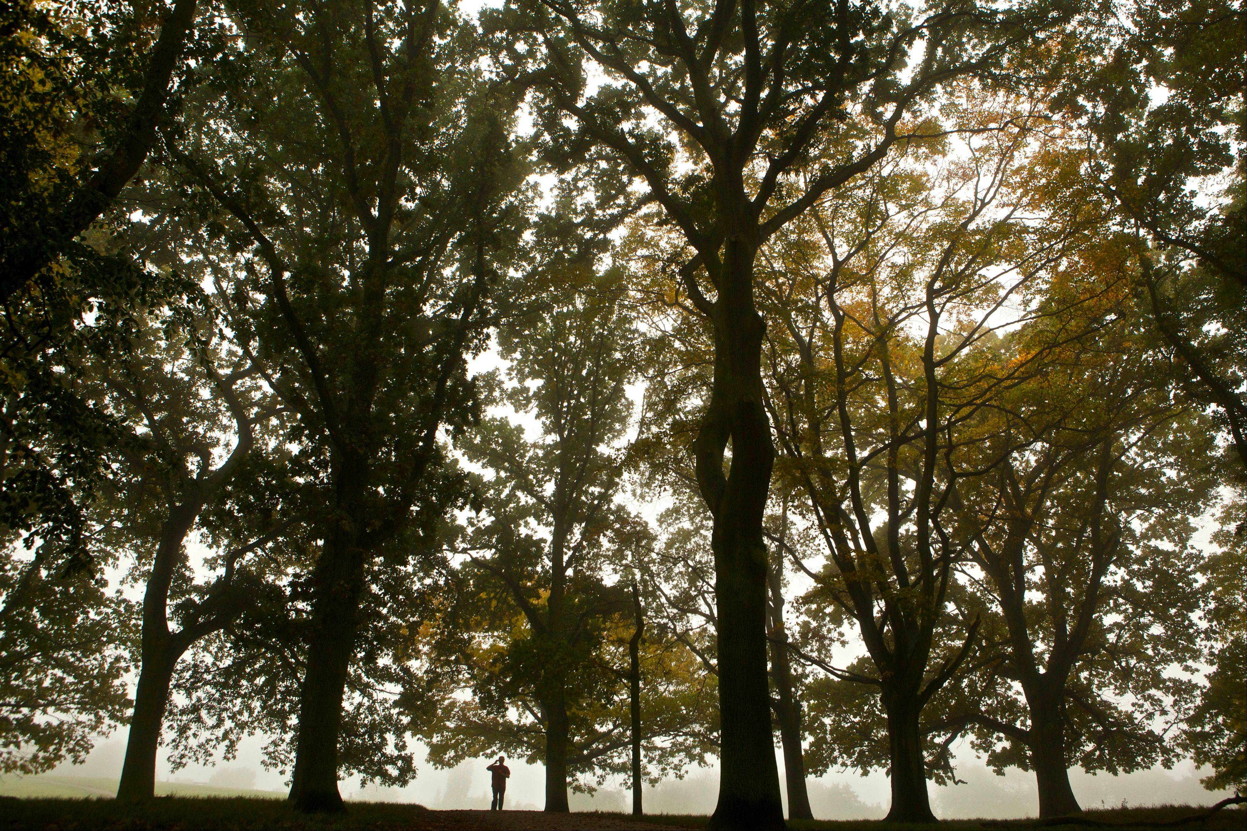 A jogger runs underneath trees bearing autumnal colors as they are shrouded in mist on Hampstead Heath in London. The Heath's woods, grasslands and ponds in north London feel far from the urban hubbub, but the Heath also offers a view of the city from Parliament Hill.