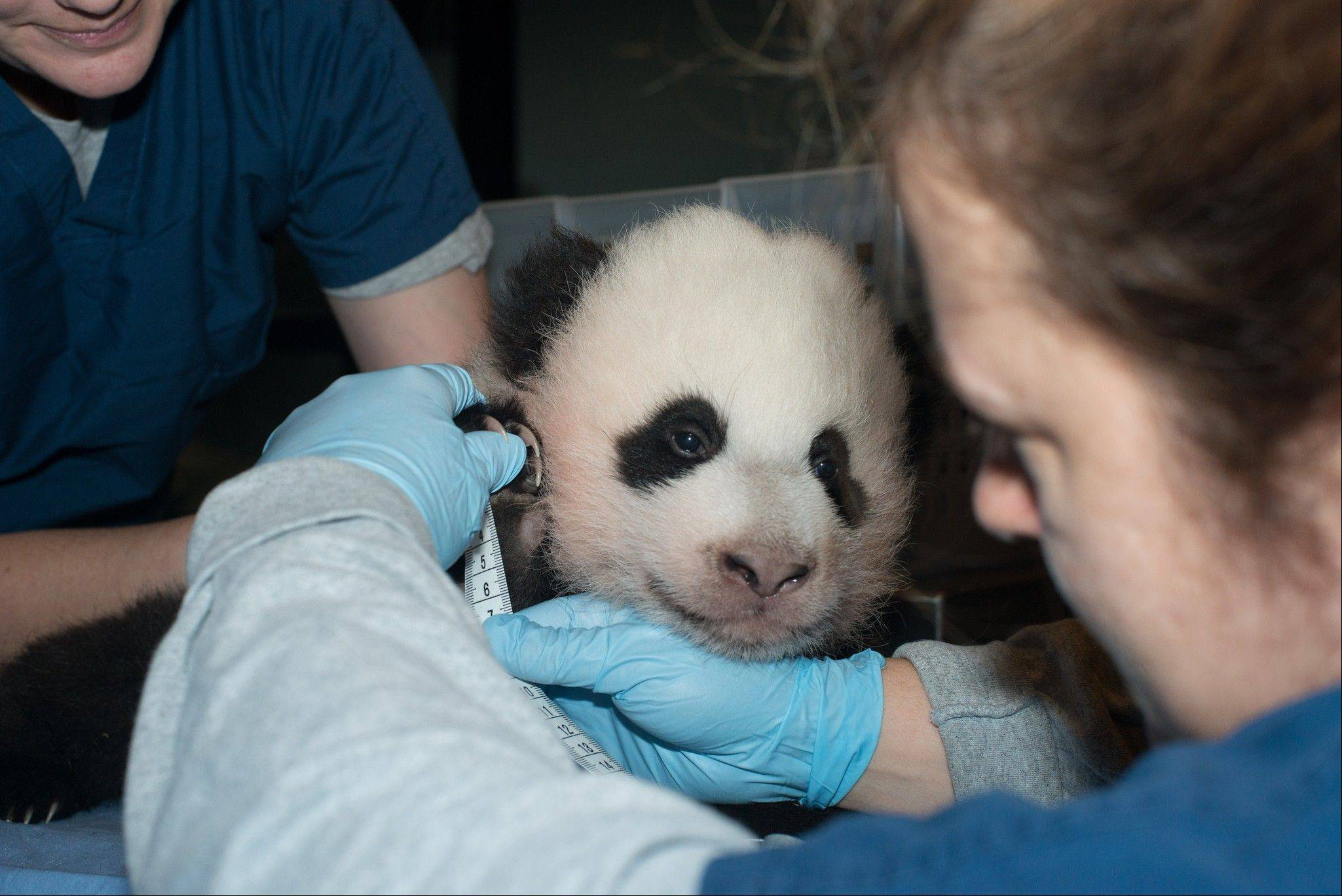 The National Zoo is naming its giant panda cub Bao Bao after receiving more than 123,000 votes from the public. The cub was born Aug. 23 and is only the second surviving panda cub born in Washington.