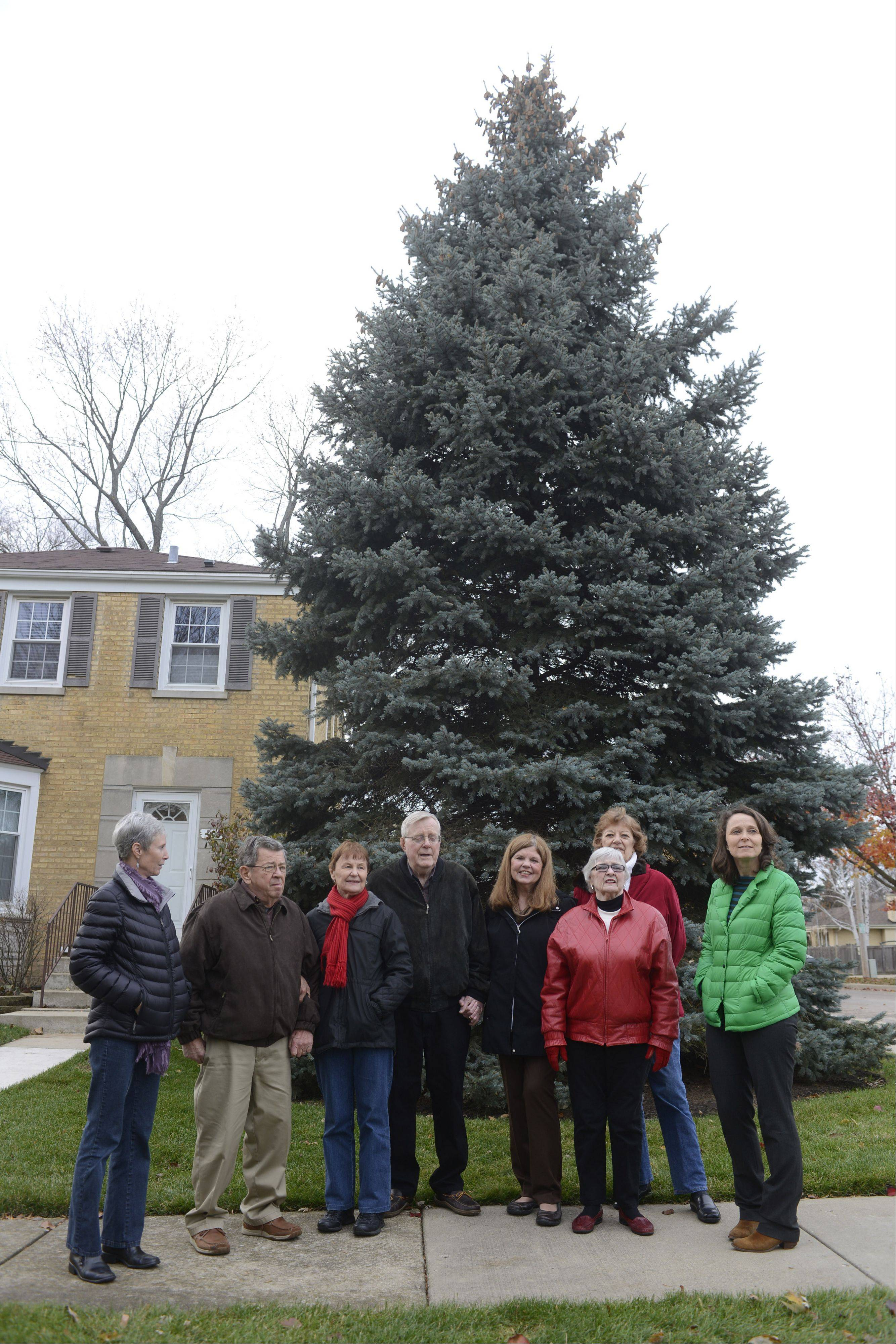 Having all played a part when the tree was planted on May 7, 1992, Mount Prospect neighbors, left to right, Sue Lello, Larry and Rosemary Hinkemeyer, Tom and Renae McGovern, Carol Tortorello, Roberta Edmonson and Lorelei McDermott stand in front of the tree.