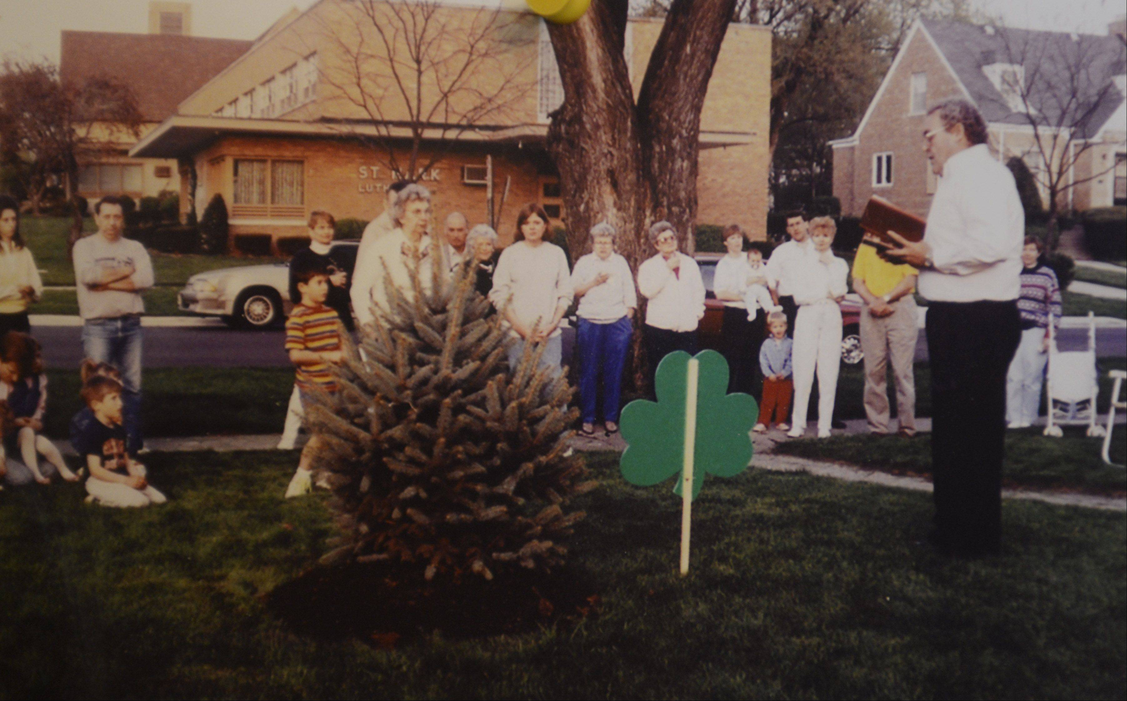 "Planted on May 7, 1992, in memory of Tommy McGovern, this small ""Fat Albert"" spruce tree now towers over the neighborhood in the 200 block of South Pine Street in Mount Prospect. Tonight's annual lighting of the ""Tommy Tree"" kicks off a neighborhood remembrance and celebration."
