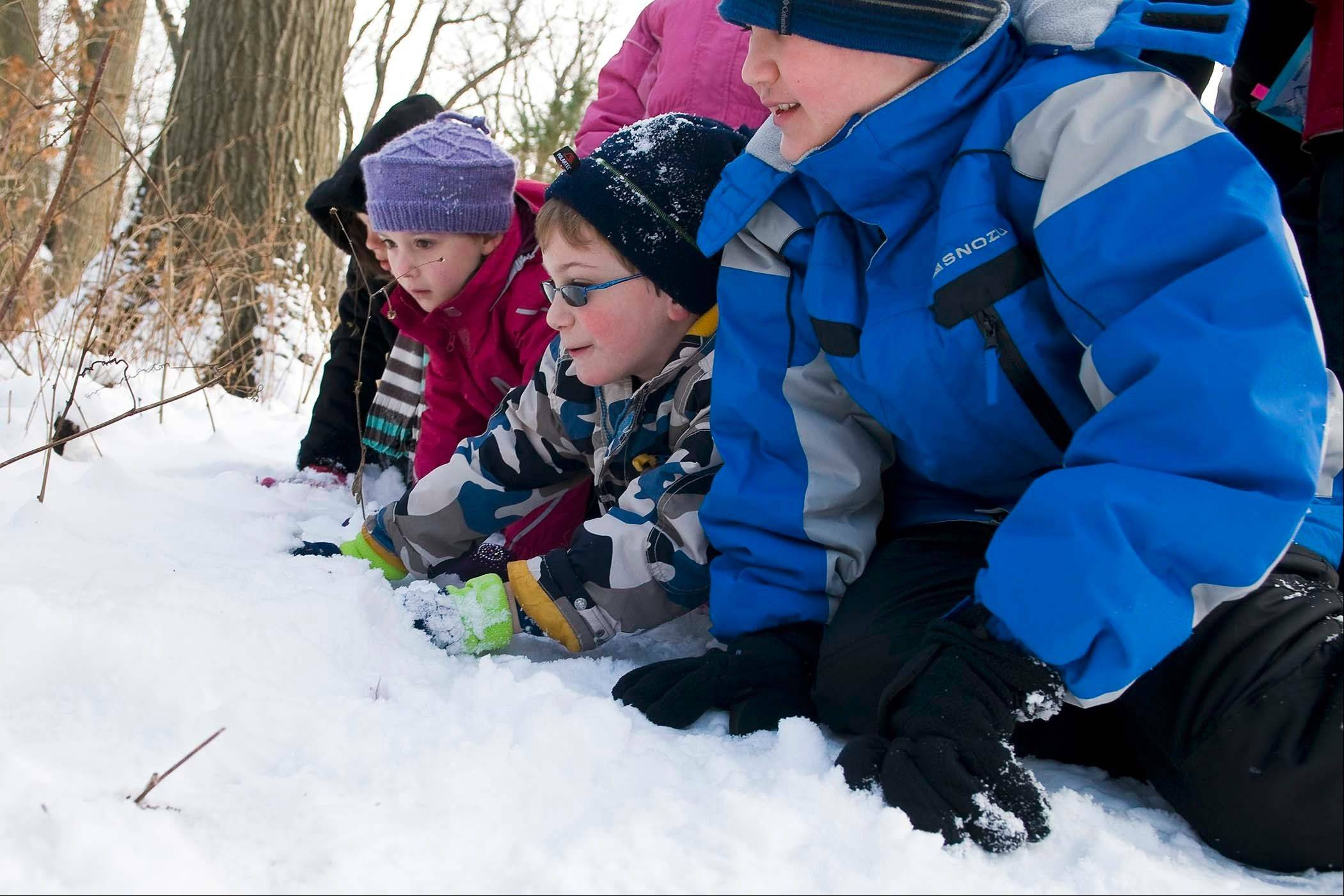 Kids can track animals in the McDonald Woods and do art and science projects based on animal adaptations for winter at the Chicago Botanic Garden this winter.
