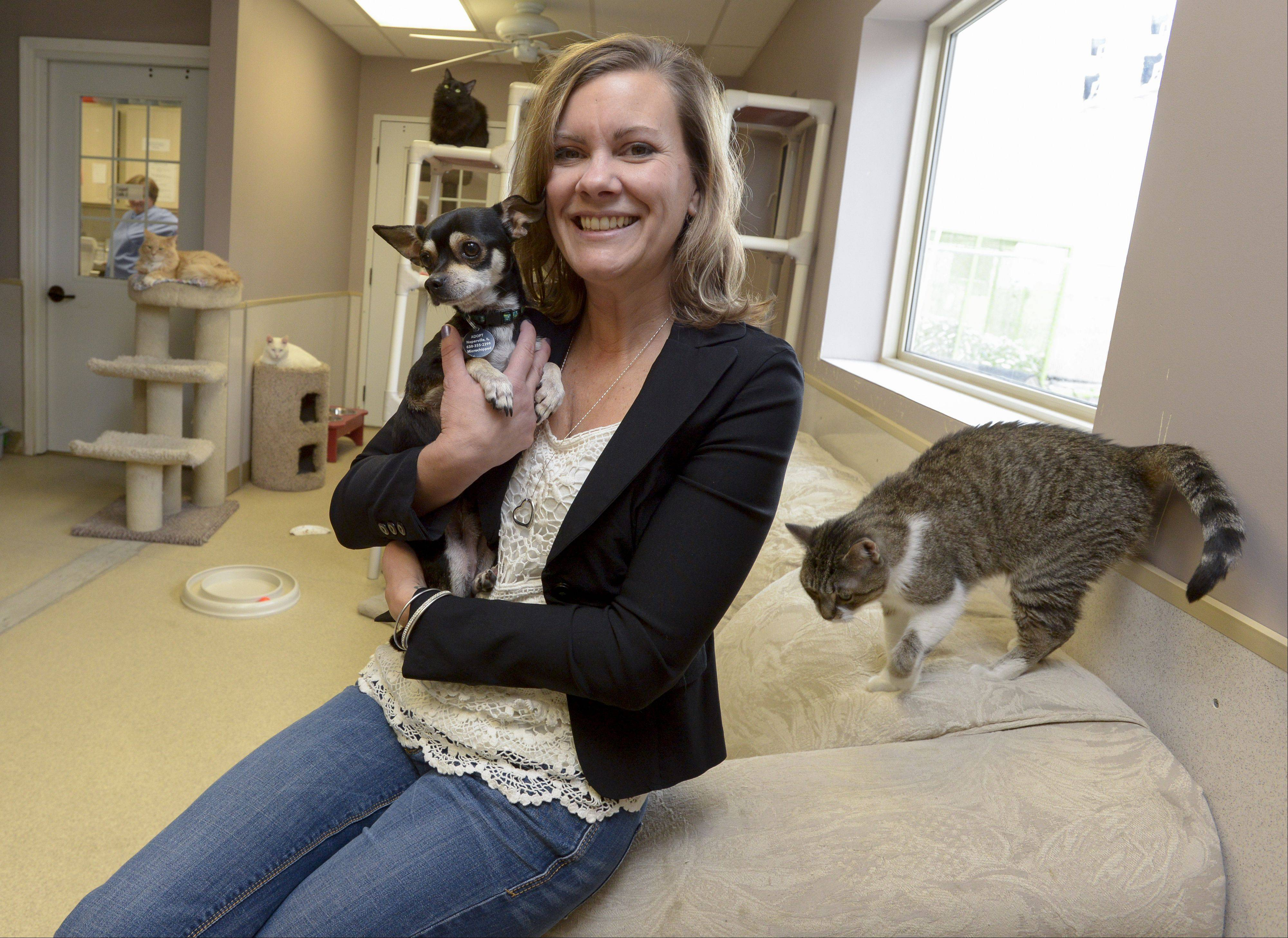 Chris Stirn is the new executive director of the ADOPT pet shelter in Naperville.
