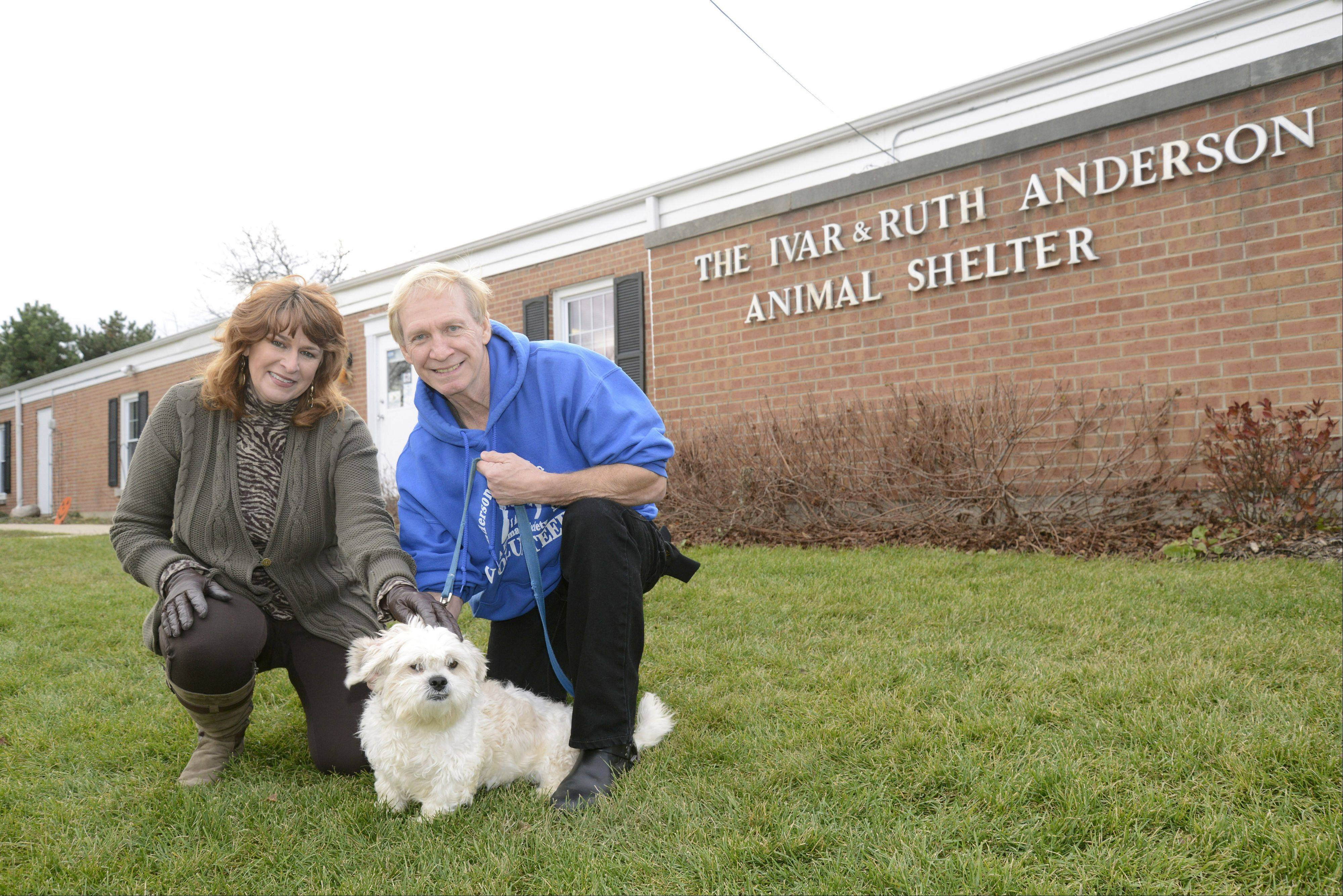 "Anderson Animal Shelter volunteer Randy Sandman of Elgin and his wife, Jan, visit with Rocky, a dog available for adoption. Randy enjoys working with Rocky and calls him ""the perfect gentleman."" With the help of Jan, he was able to raise $550 for the South Elgin shelter."
