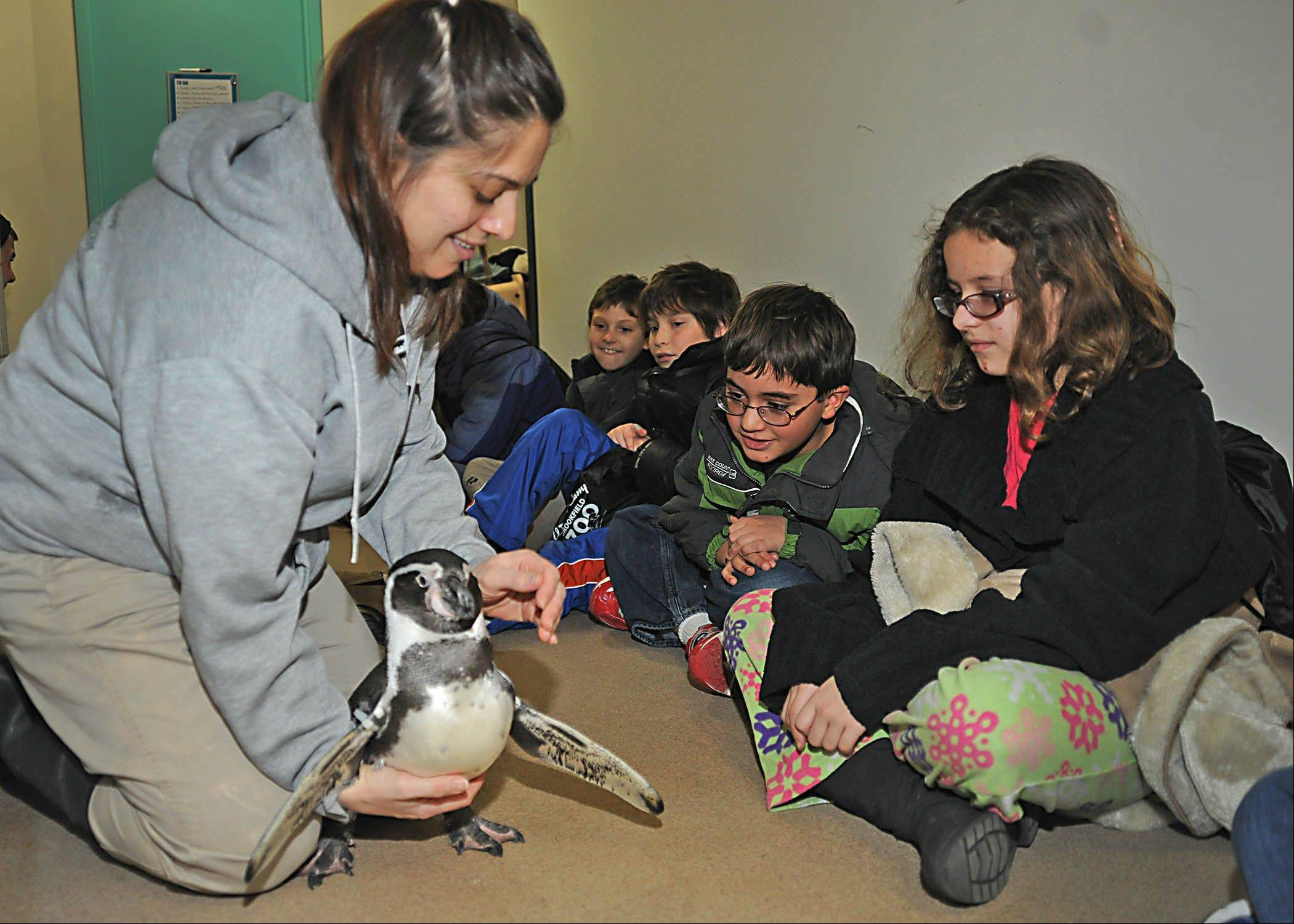 Participants in Brookfield Zoo's Winter Zoo Camp get a close look at a Humboldt penguin.