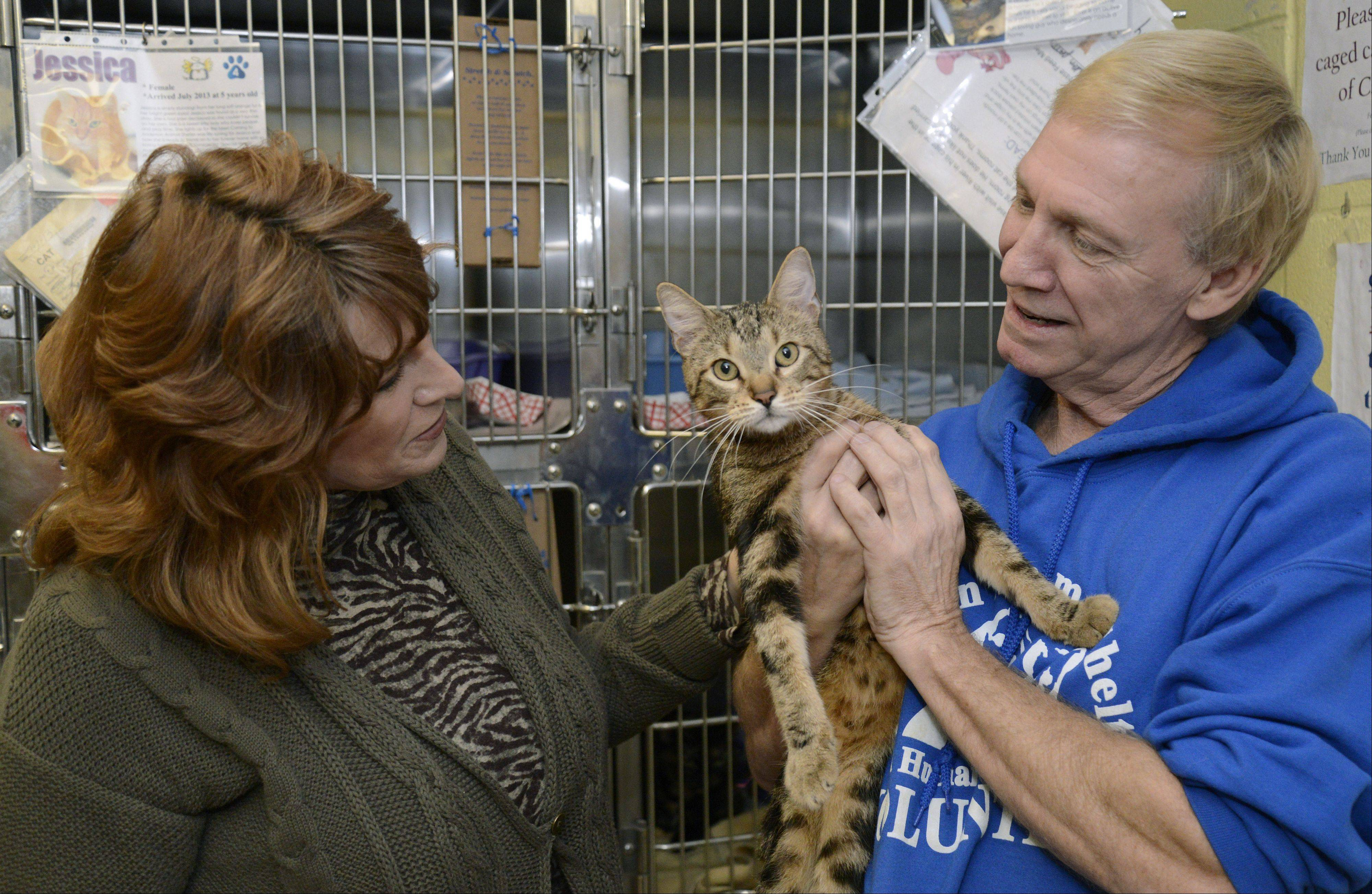Randy Sandman of Elgin and his wife, Jan, interact with River, a cat available for adoption from Anderson Animal Shelter. Randy has been a volunteer at the South Elgin shelter for about a year.