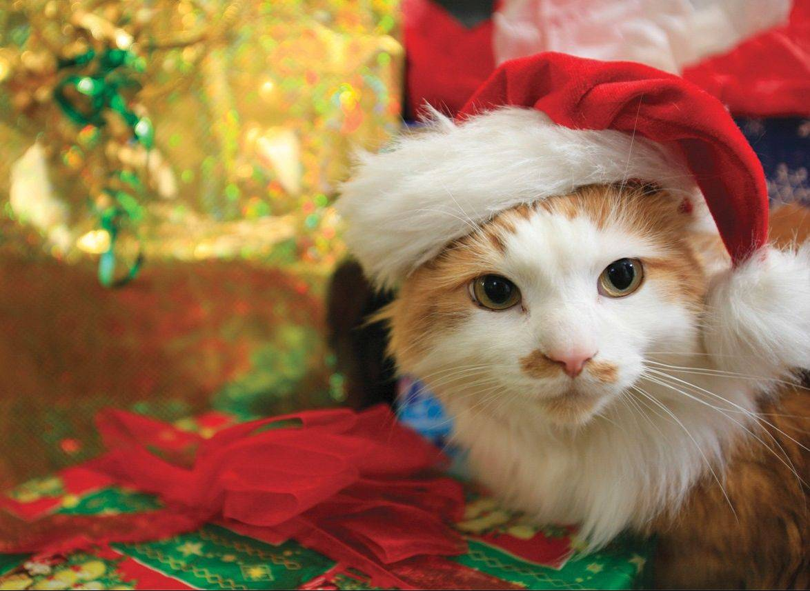 There is something about putting a Santa hat on a pet cat or dog during the holidays that brings a sense of joy to your heart, no matter how much they hate them. Just shoot fast, at their level and try to fill the frame to get a better picture.