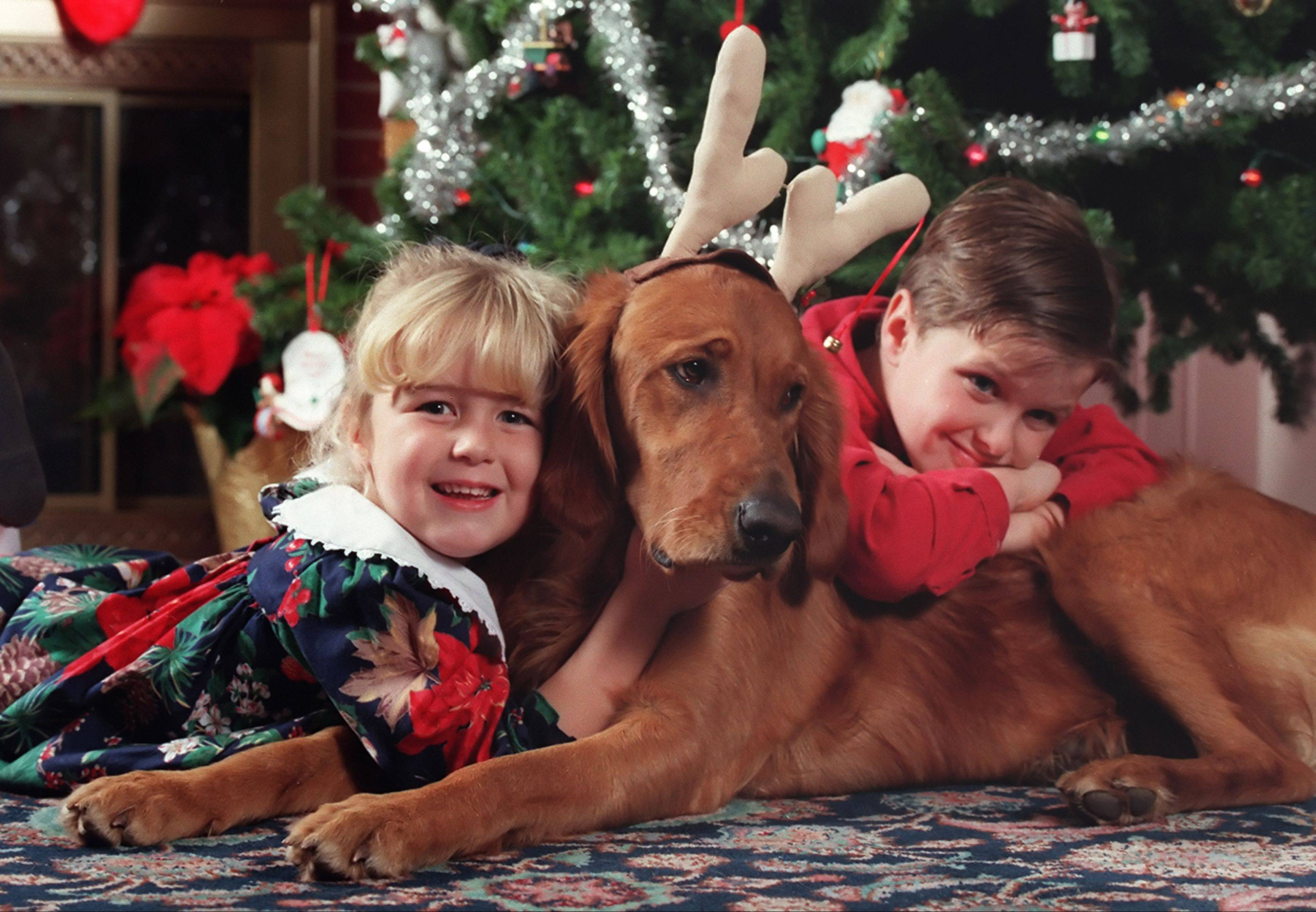 Erin and Nathan Boucher of Tower Lakes pose with Penny, their golden retriever, for a holiday picture. One of the most important aspects of shooting pets and children is to shoot at their level, even if that means laying on the ground.