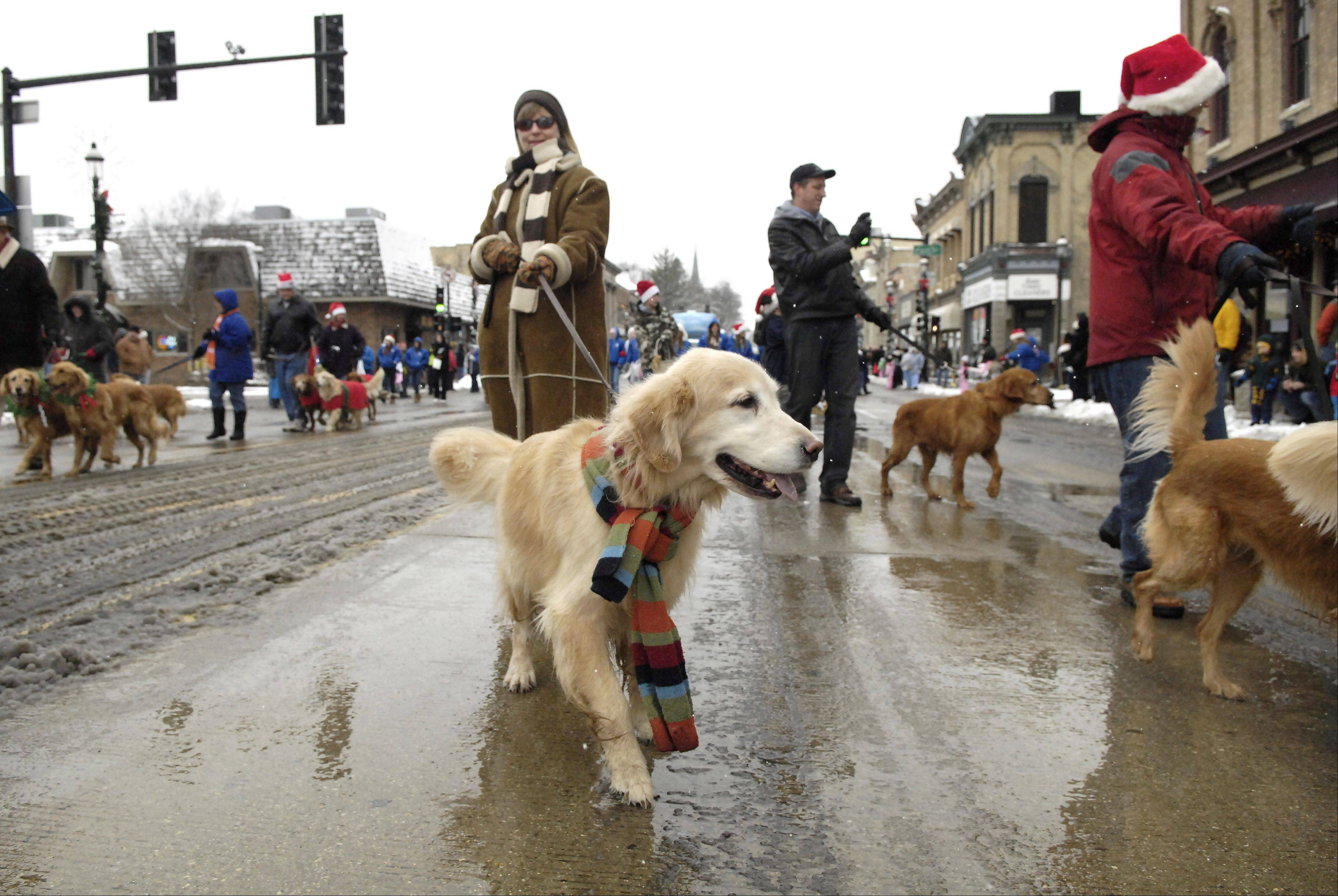 LAURA STOECKER/lstoecker@dailyherald.com, 2008Animal lovers walk their dogs in the Spirit of Christmas Parade through downtown Dundee at a previous Dickens in Dundee festival.
