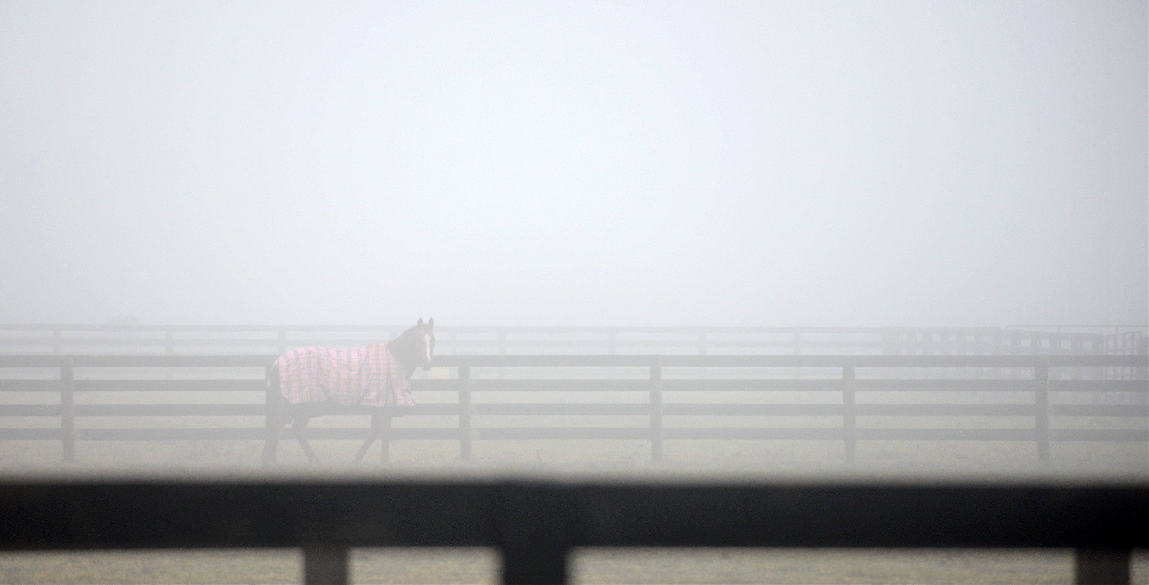 A horse walks along a fence line in a fog-shrouded field in rural Elgin Wednesday, where temperatures hit the mid-50s. Thursday's forecast calls for clearer skies but high temperatures about 20 degrees cooler, according to AccuWeather.
