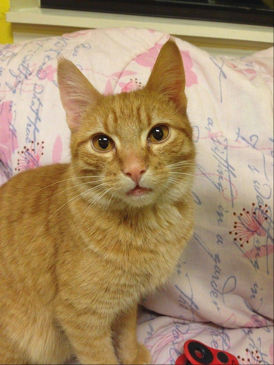 Spirit, an almost 1-year-old, male is seeking a forever home.