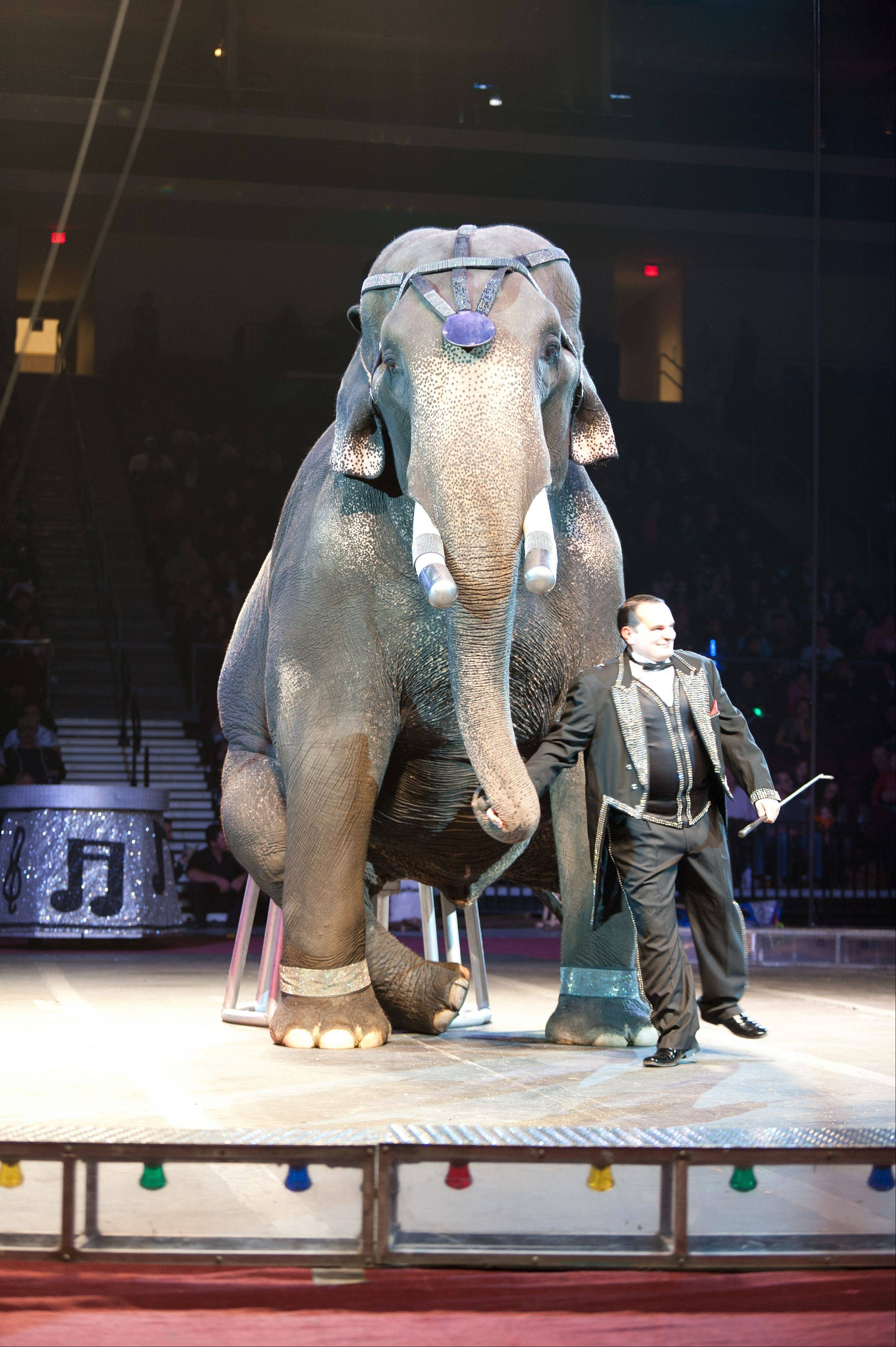 Animal performers will be featured at the �Circus Spectacular� show, coming to the Sears Centre Arena in Hoffman Estates, Friday, Feb. 21, through Sunday, Feb. 23.