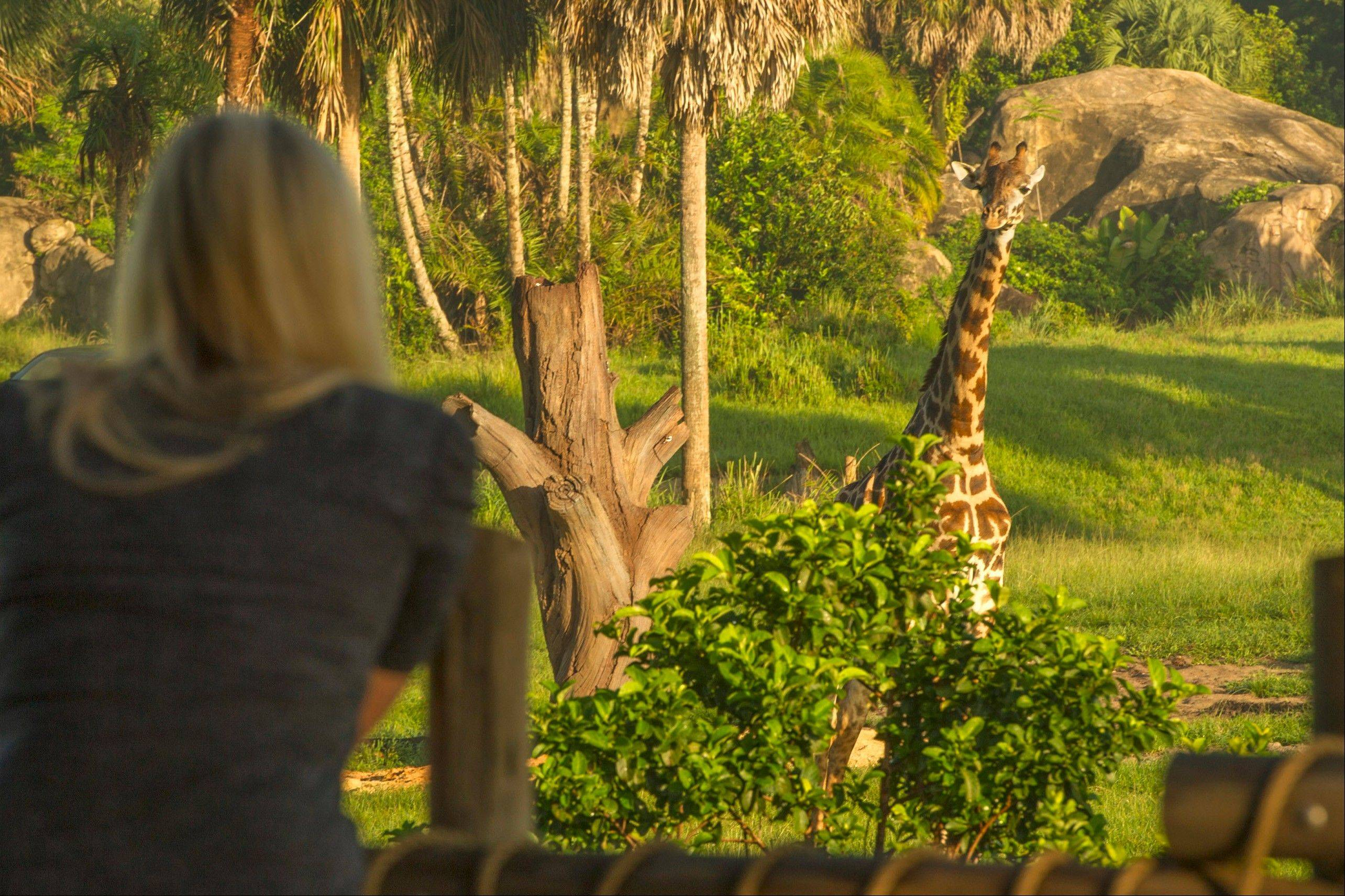 Guests look out over a wildlife-filled savanna on Wild Africa Trek at Disney�s Animal Kingdom, which is part of Walt Disney World Resort in Lake Buena Vista, Fla.