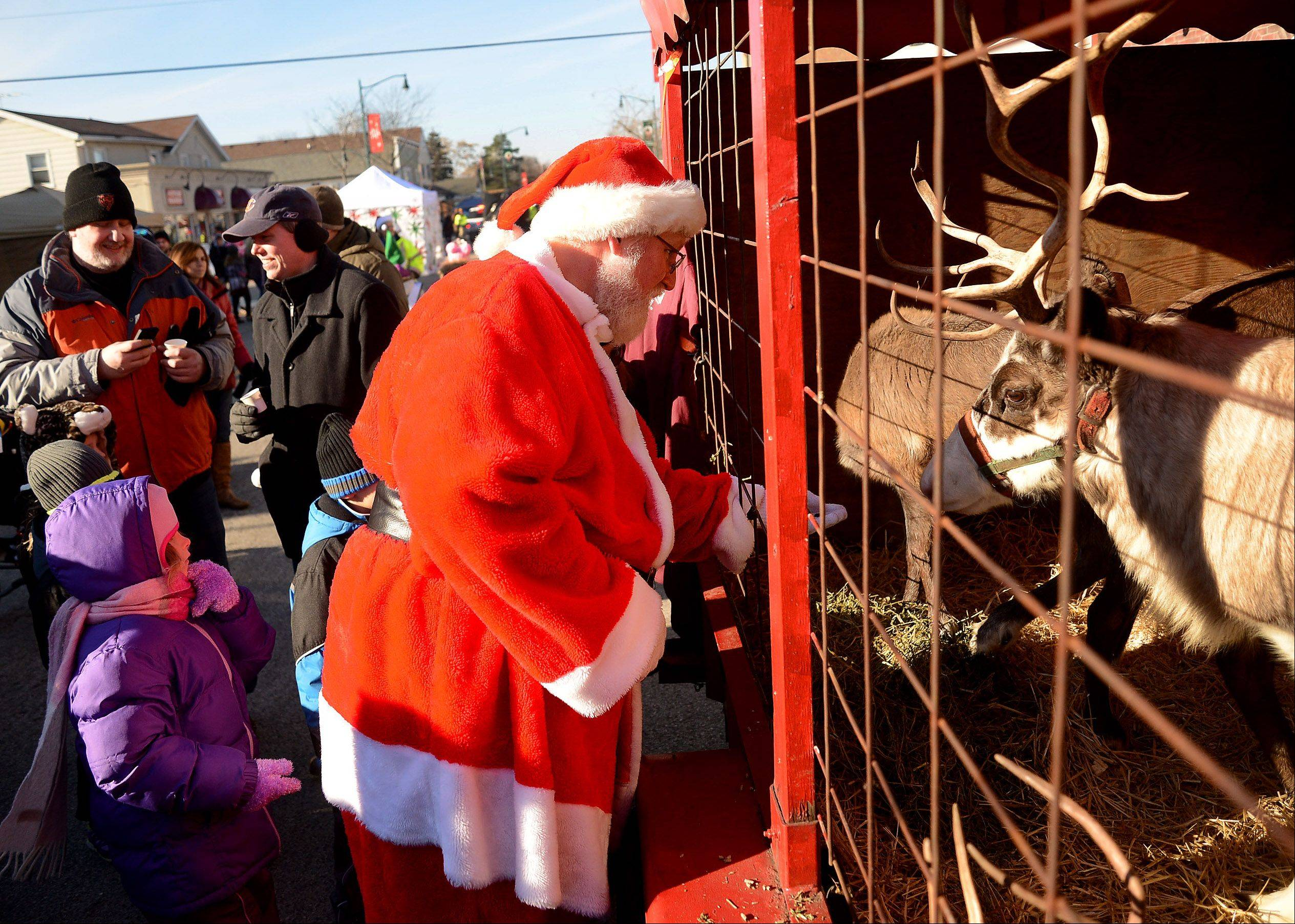 Santa arrives and feeds his reindeer at Wauconda's Holiday Walk.