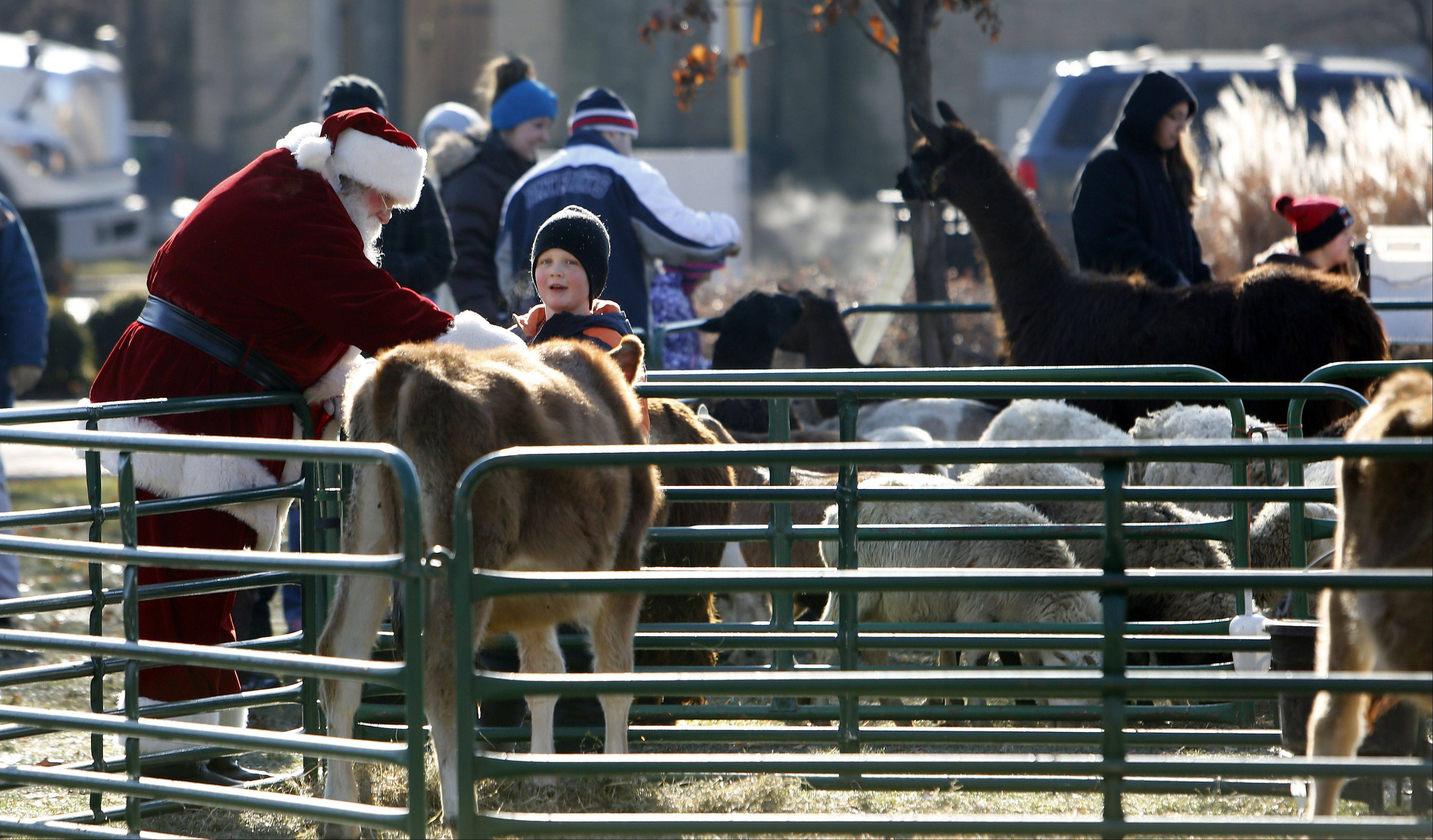 Santa takes a moment to greet some of the animals during the Dickens in Dundee festival at Grafelman Park Saturday in West Dundee.