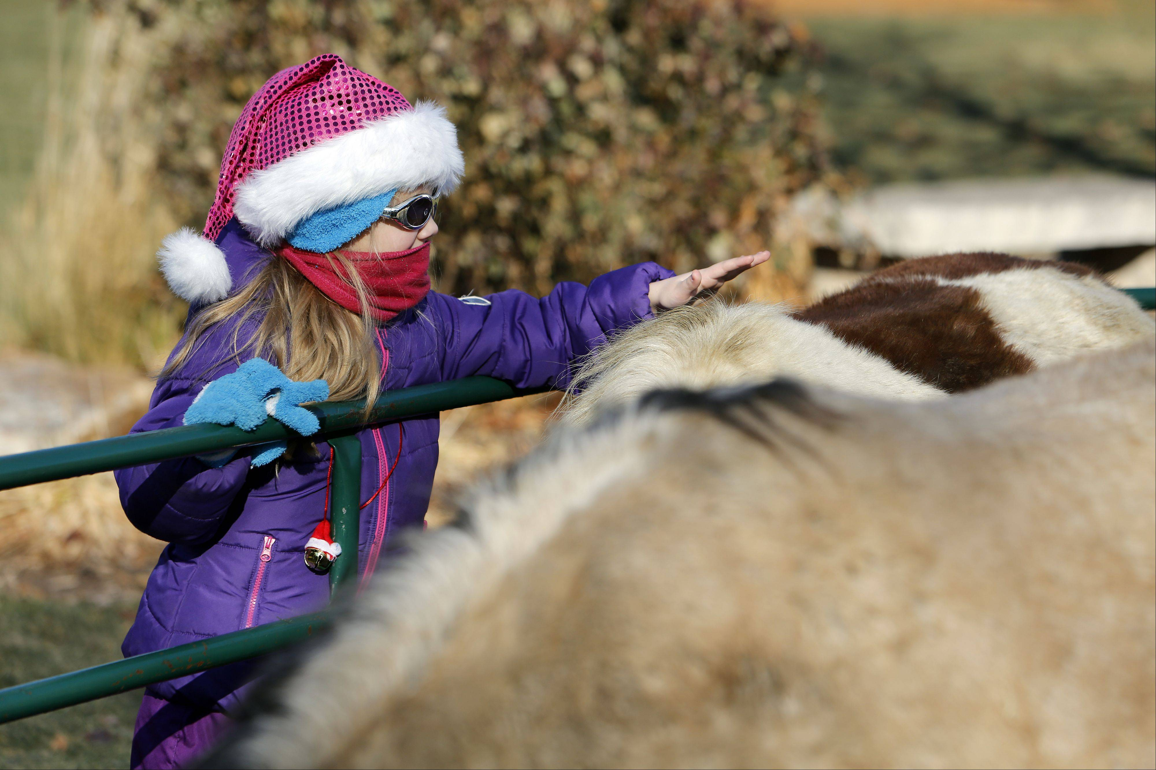 All bundled up and ready for the cold weather, Ryndall Rhoades, 8, checks out a few of the animals during Dickens in Dundee at Grafelman Park Saturday in West Dundee.