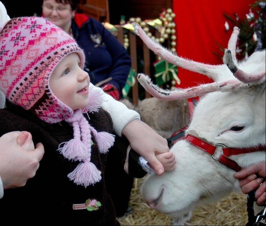 Courtesy of Ripple Public Relations Get an up-close view of reindeer at the Winter Wonderland event in downtown Highland Park.