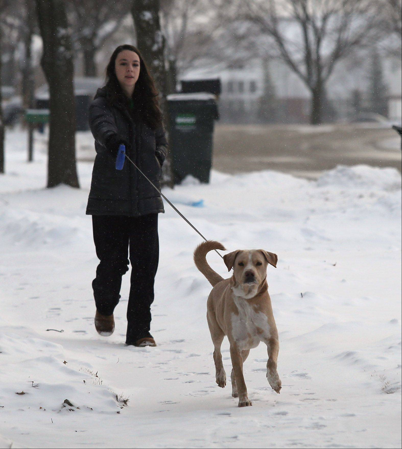 Mundelein resident Michele Mazza, 17, walks her dog, Cubbie, on snow-covered sidewalks as snow fell in Lake County Wednesday. Snow plows were out in force clearing streets during the early morning hours to help with commuter traffic.