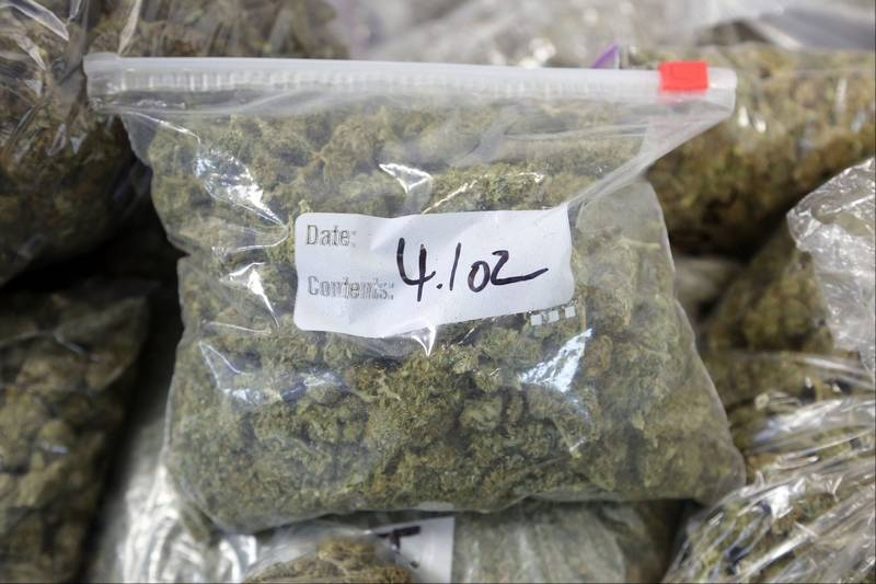how to grow 100 pounds of weed