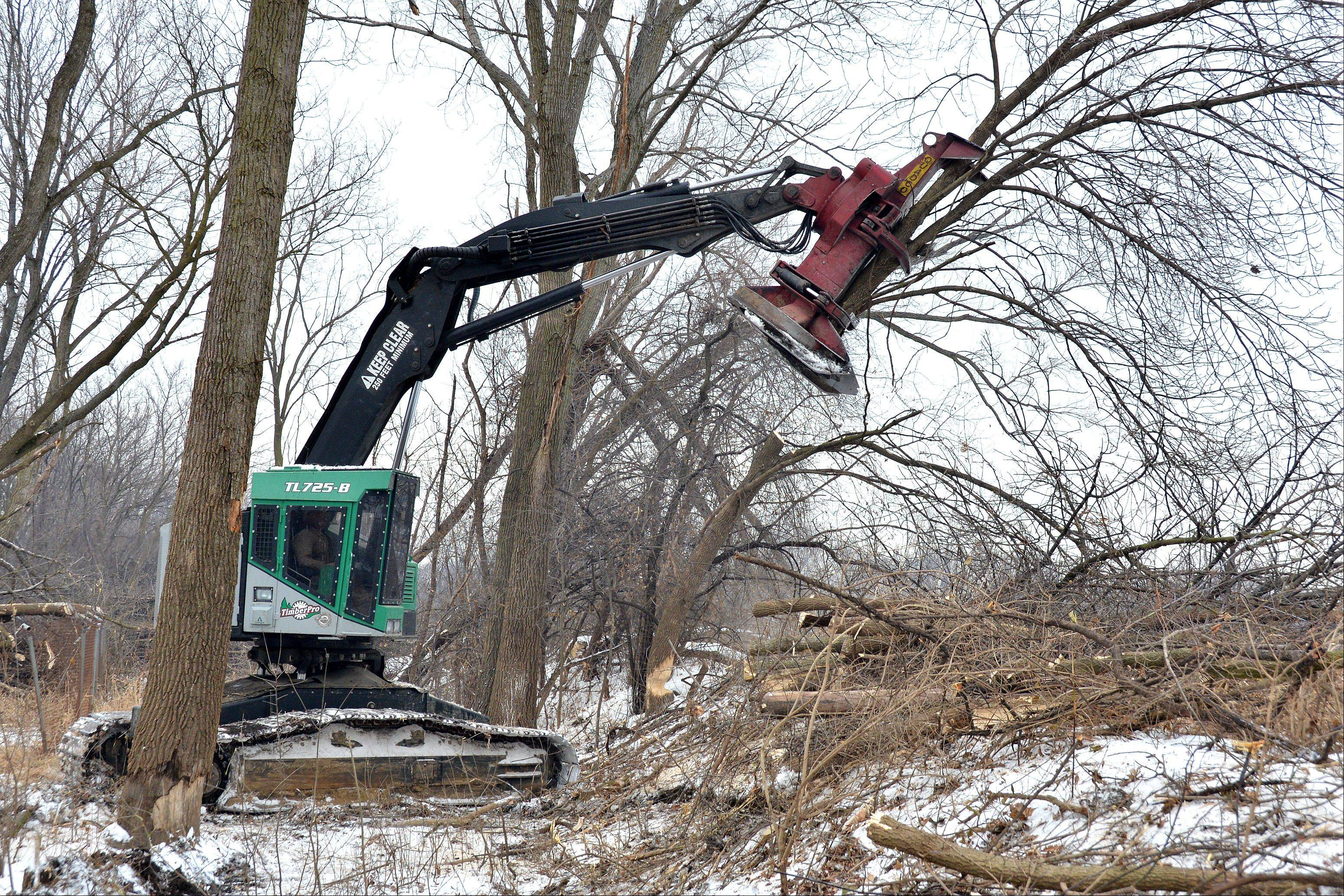 In another area of the preserve, a machine with a large rotary saw is slicing trees in half and tossing them on the ground like matchsticks. This is being done to clear out invasive plants and trees near the river.