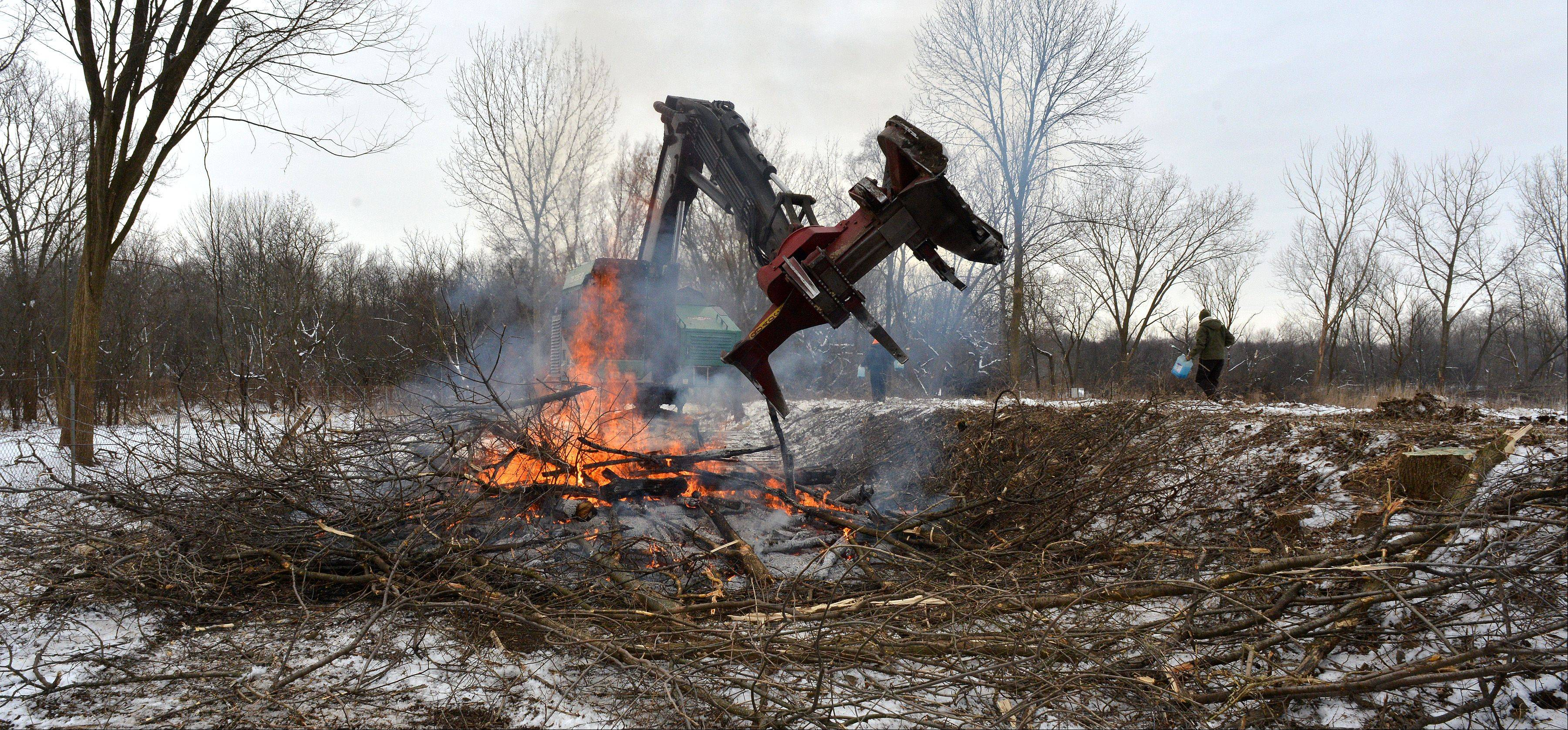 After being cut down, trees and underbrush are being burned.