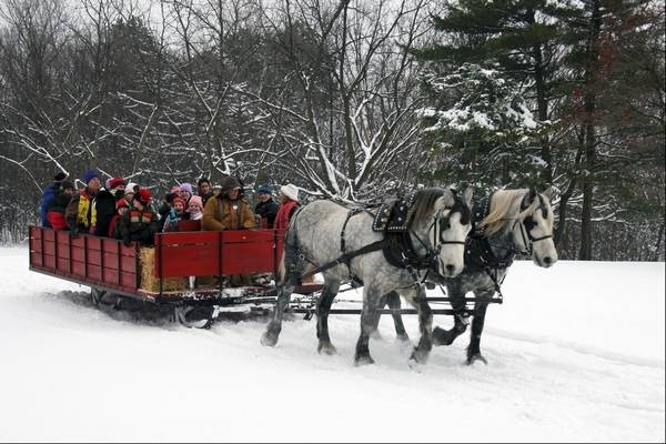 Horse Drawn Sleigh Rides Offered At Danada In Wheaton
