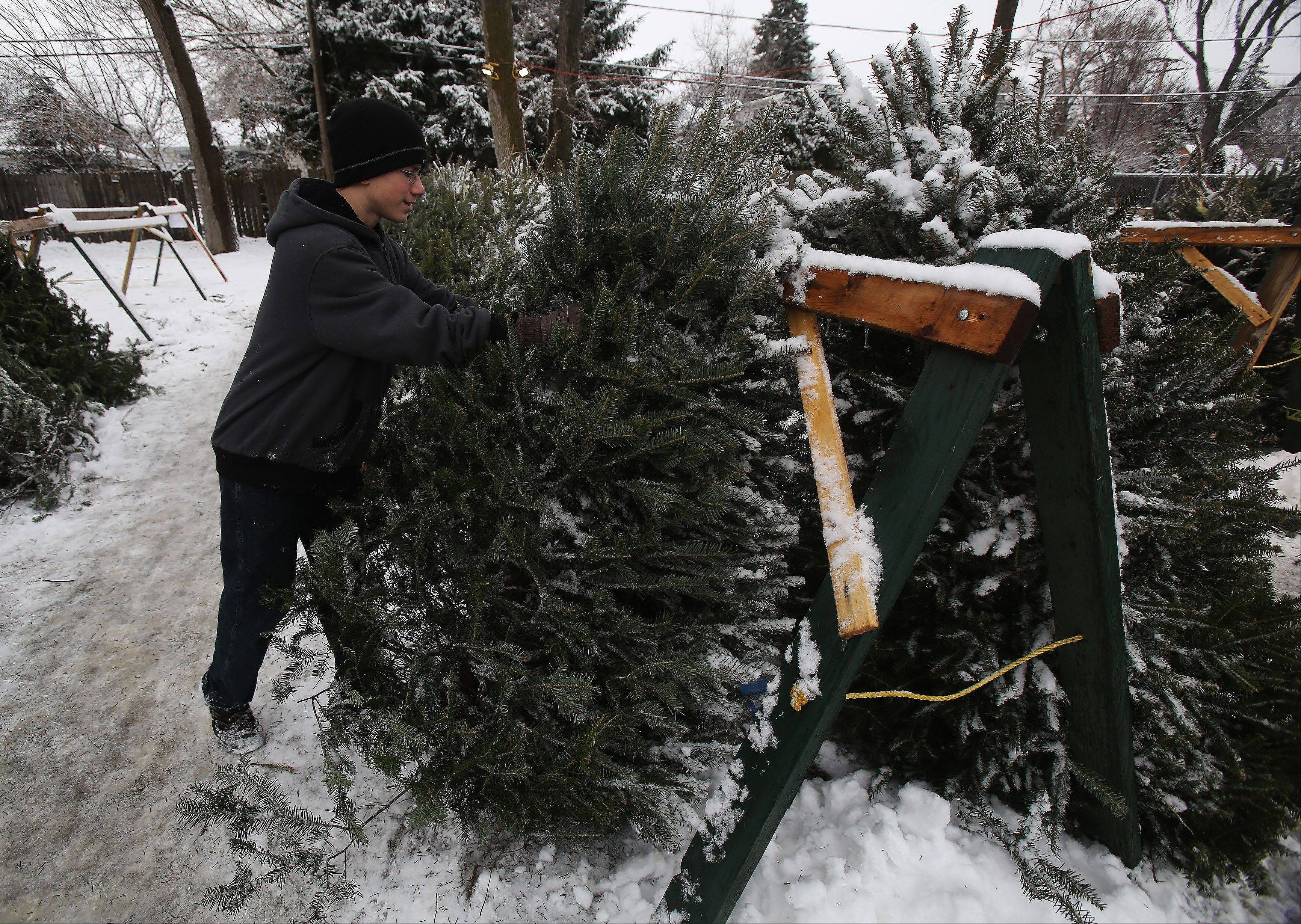 Boy Scout Scott Haseman, 14 of Mundelein shakes the snow off Christmas trees Sunday at St. Andrew Lutheran Church in Mundelein, where his troop was conducting a tree sale. Towns in Lake and McHenry counties where heaviest hit by snow early Sunday.