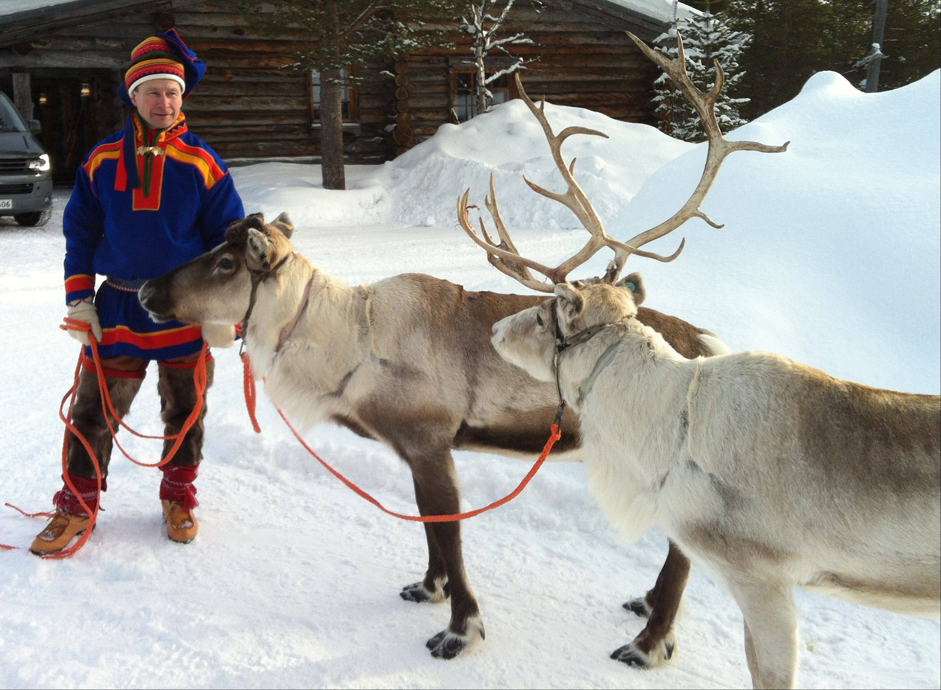 A Sami handler in traditional clothing holds two of his herd in Saariselka, Finnish Lapland.