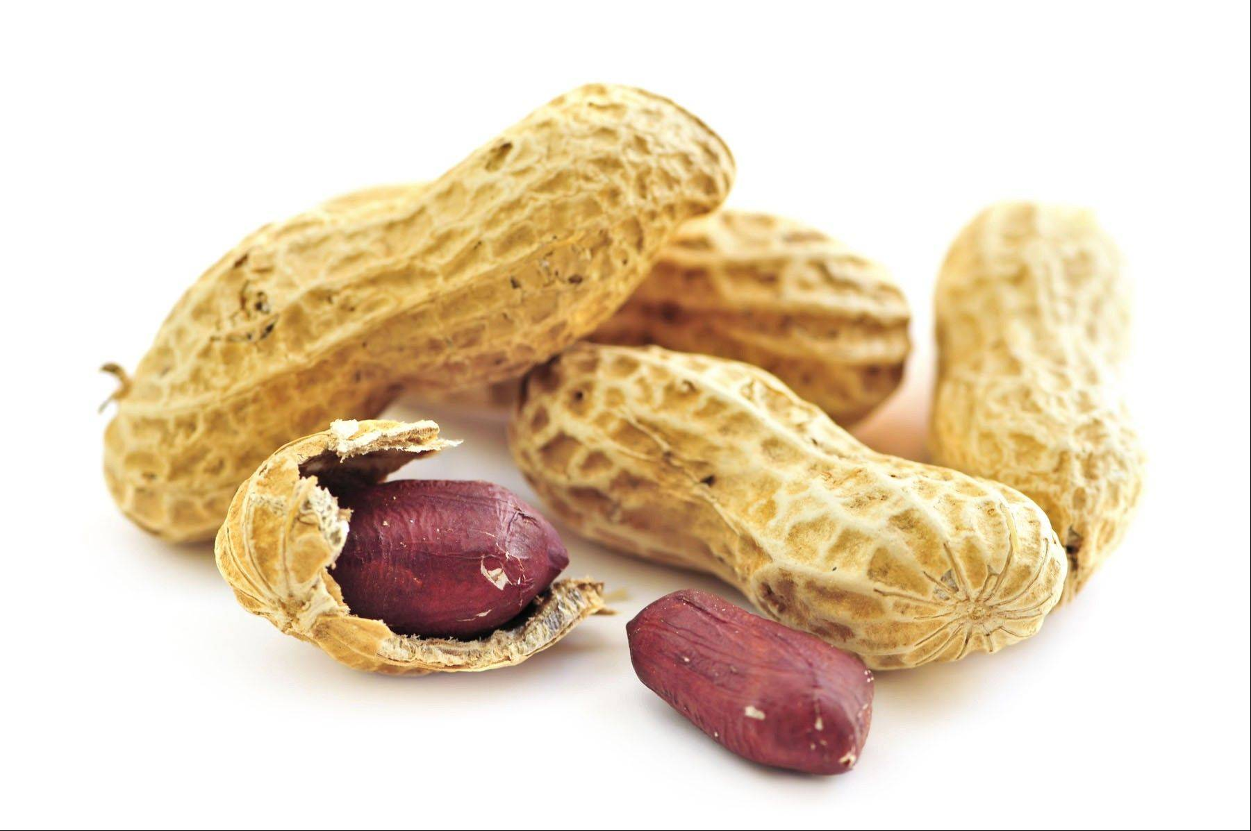 Peanut allergies are on the rise and affect up to 2 percent of the population in the United States and other Western countries. Women were once advised to avoid nuts in pregnancy to avoid triggering allergies in their offspring, but that advice was later rescinded.
