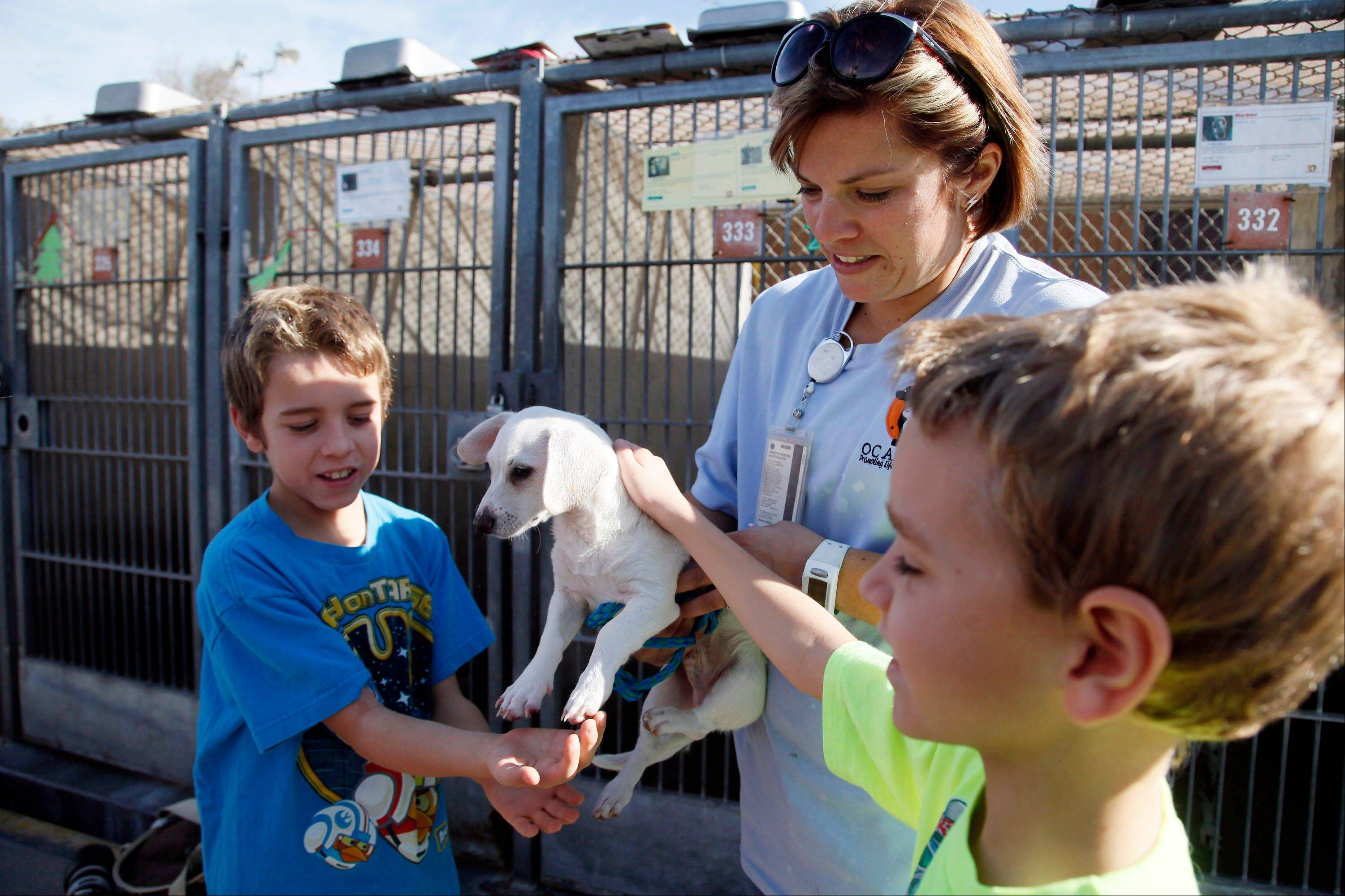 Erika Bennett, a kennel attendant/animal control officer at OC Animal Care, holds up a puppy for brothers Ryan Wartenberg, left, and Jason Wartenberg, as they look into adopting a pet at the shelter in Orange Calif. Some shelters around the country are ramping up for Christmas Day deliveries of new family pets, a move applauded by the American Society for the Prevention of Cruelty to Animals, whose new study supports seasonal adoptions.