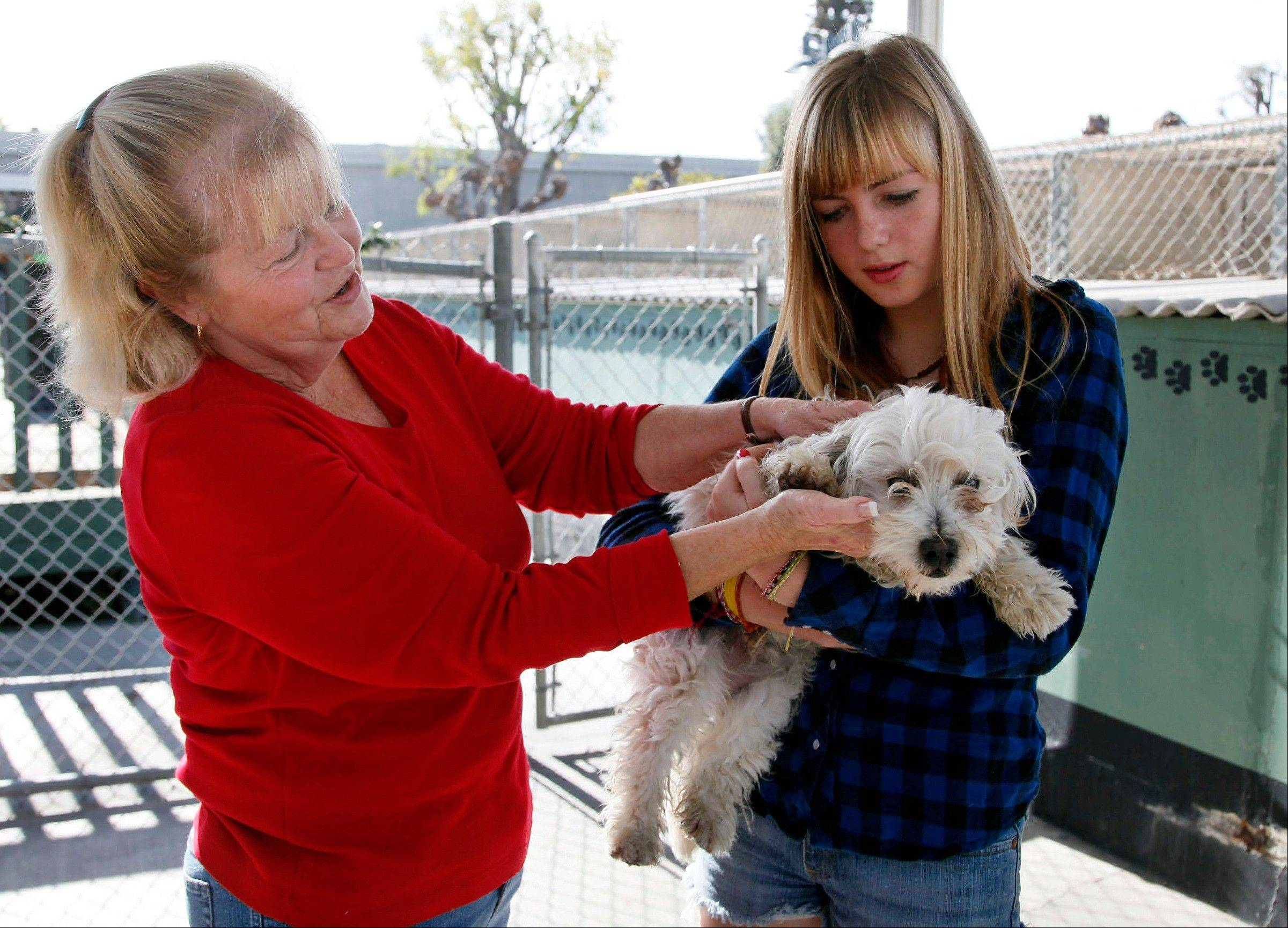 Carol Adams, left, and her daughter Michelle look into adopting a dog at the OC Animal Care shelter in Orange, Calif.