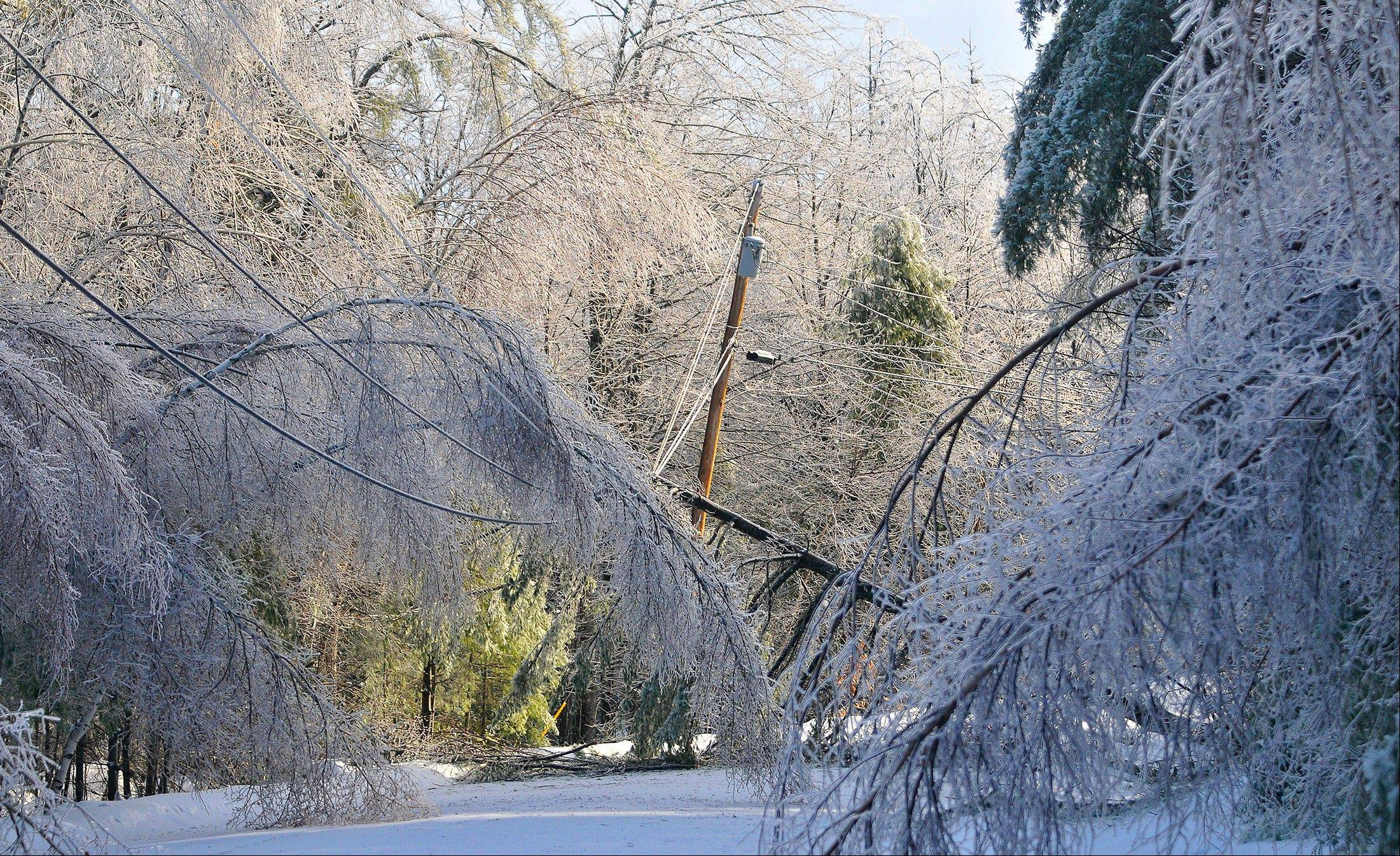 Trees frozen in ice cripple a section of power lines Tuesday on Maplehurst Drive in Belgrade, Maine.