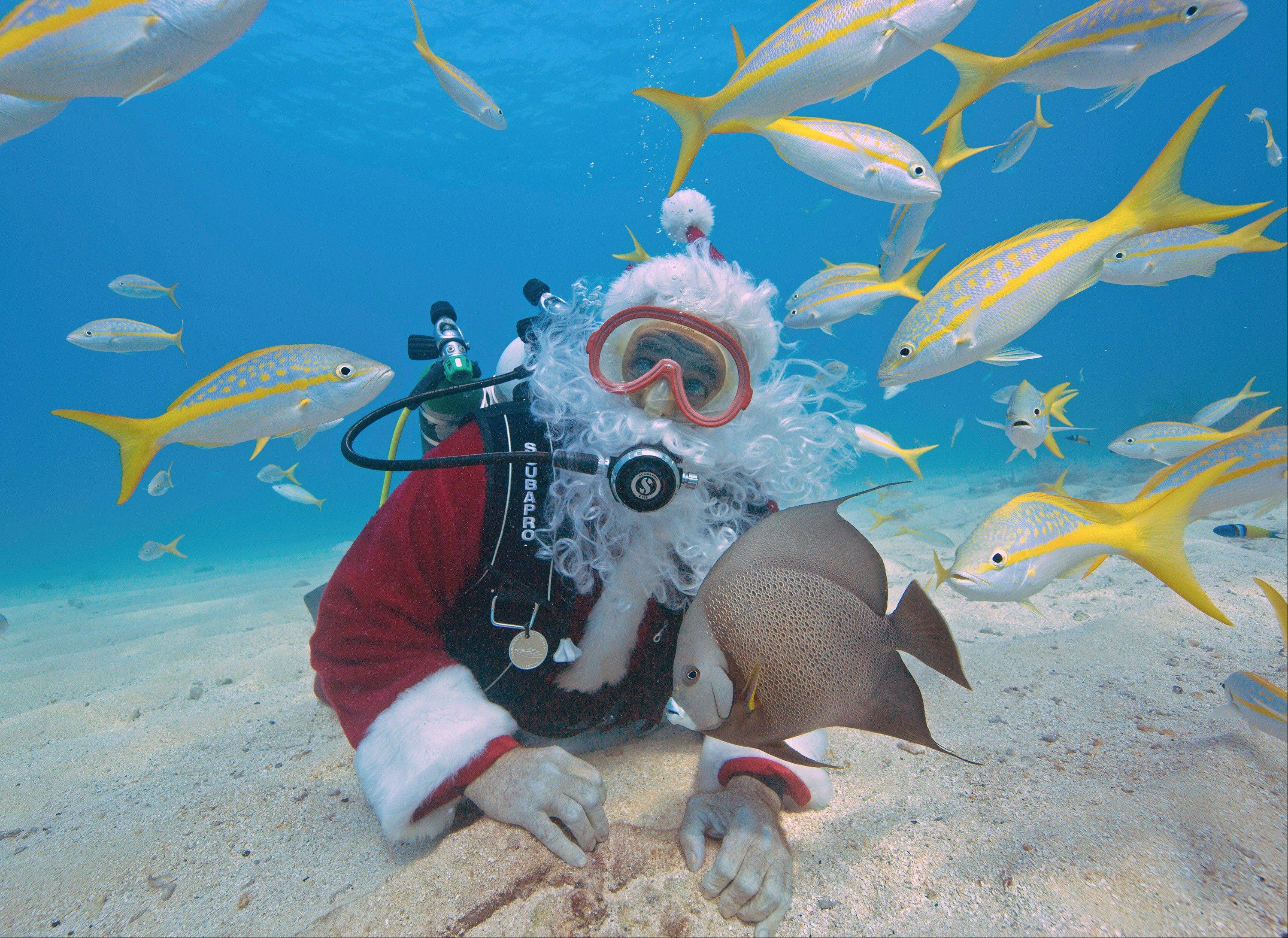 Spencer Slate, garbed as Santa Claus, dives with yellowtail snapper and an angelfish Tuesday in the Florida Keys National Marine Sanctuary off Key Largo, Fla.