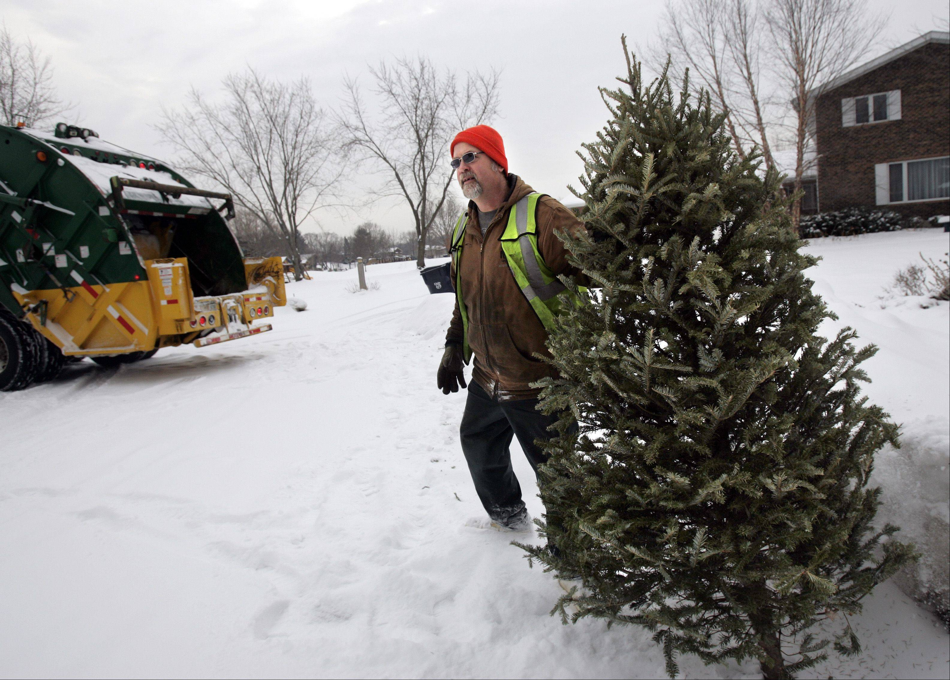 BRIAN HILL/bhill@dailyherald.com, 2009 Most towns in Kane County offer free Christmas tree recycling in early January.