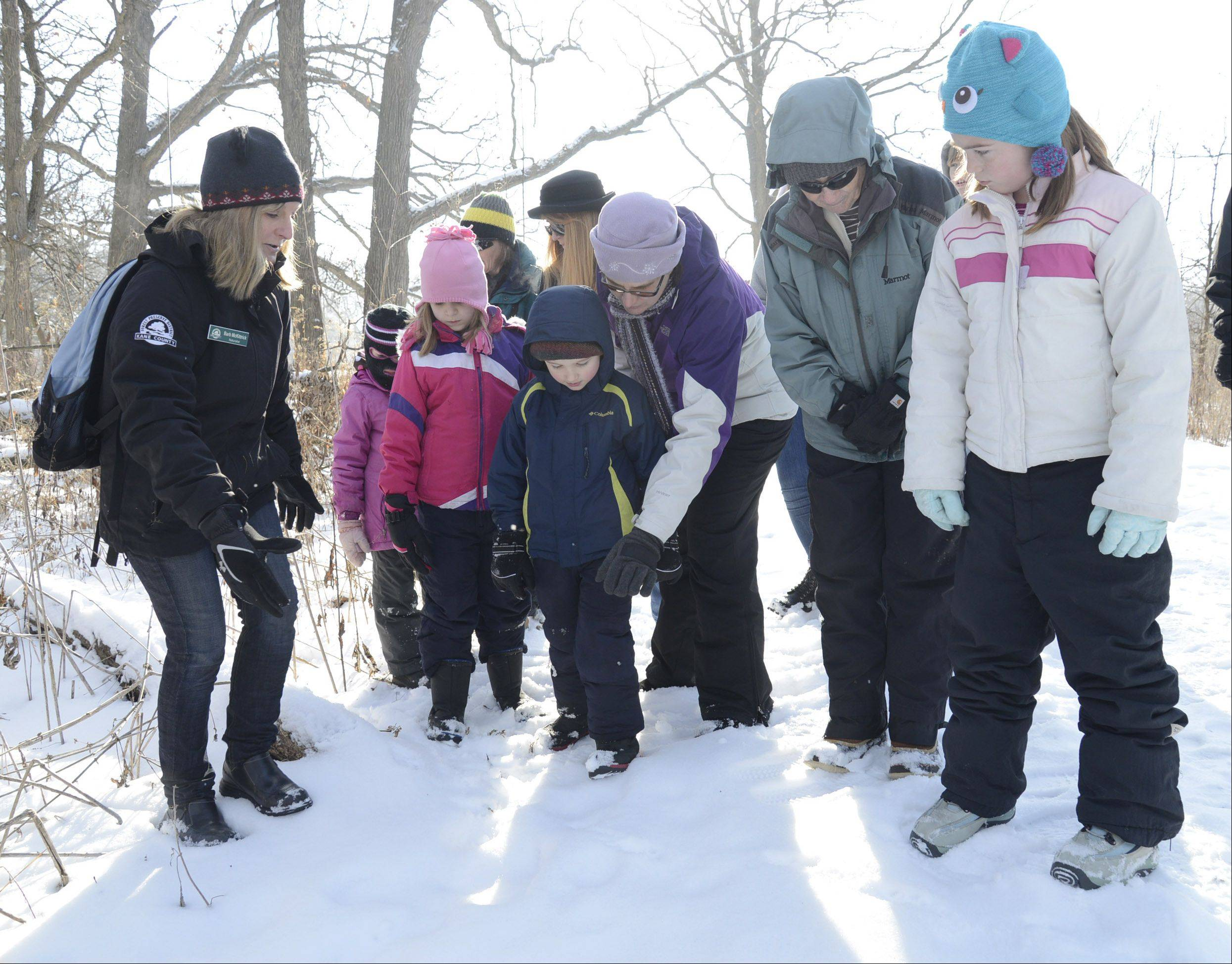 Kane County Forest Preserve naturalist Barb McKittrick, left, identifies raccoon tracks in the snow during a tracking and scavenger hunt program at Bliss Woods Forest Preserve in Sugar Grove on Friday. Lisel Ulaszek of Campton Hills (center) points out the tracks to her son, Oliver, 4, next to Pat Schaefer of Elburn and her granddaughter Shannon Dame, 9, visiting from Michigan.