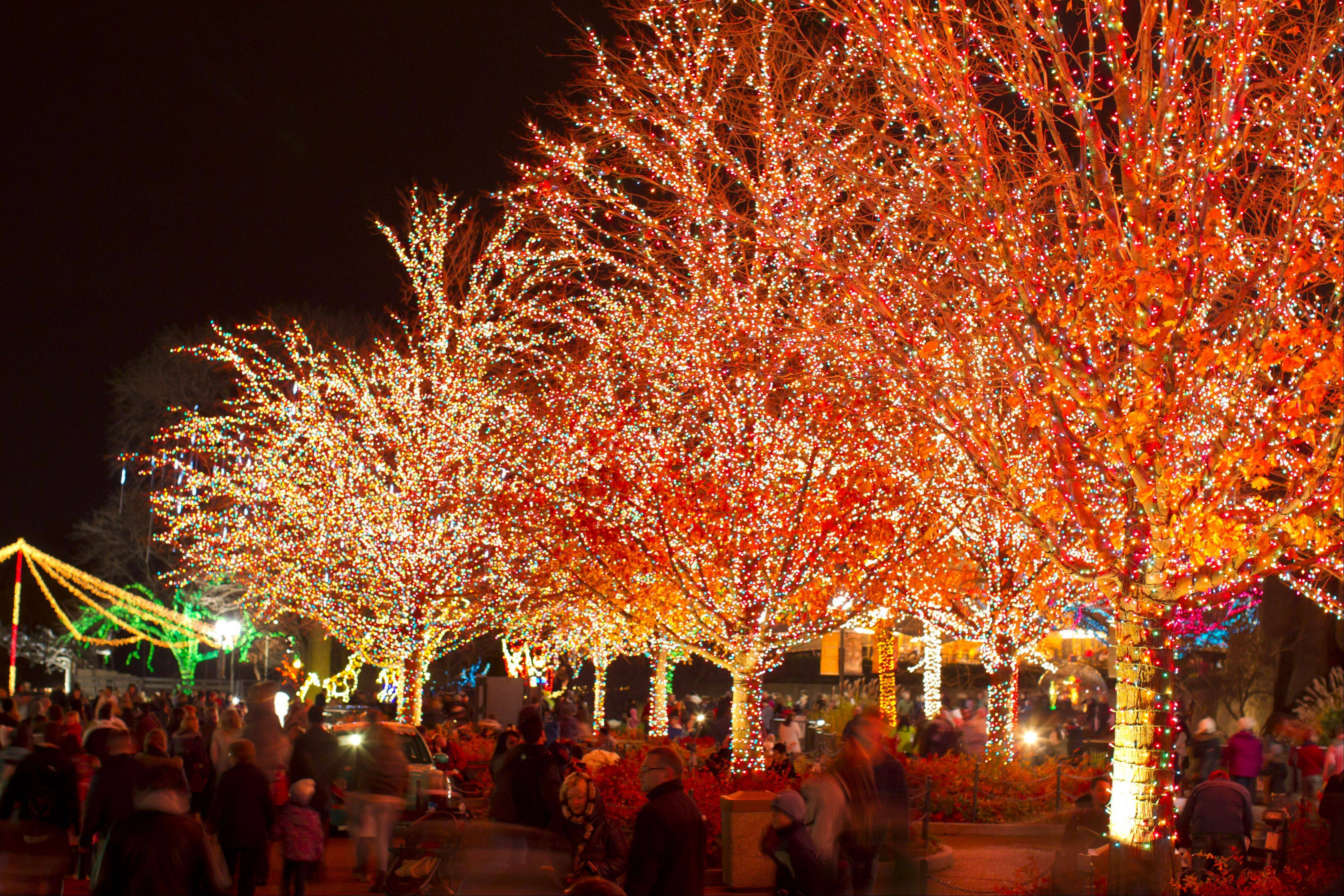 More than 2 million colorful ligths are showcased at the annual ZooLights celebration at Chicago's Lincoln Park Zoo.