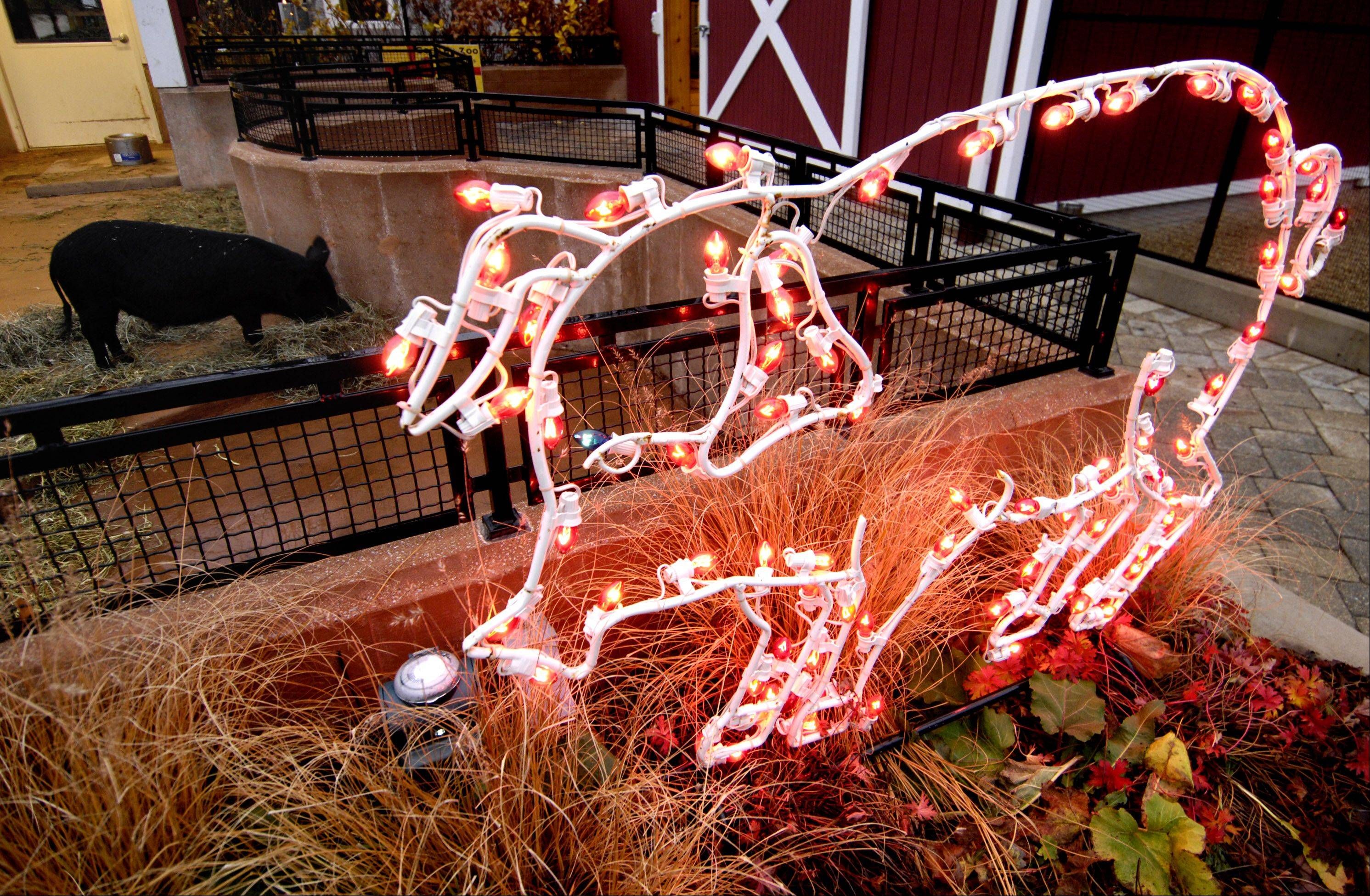 See holiday lights and holiday displays at the annual Festival of Lights at the Cosley Zoo in Wheaton.