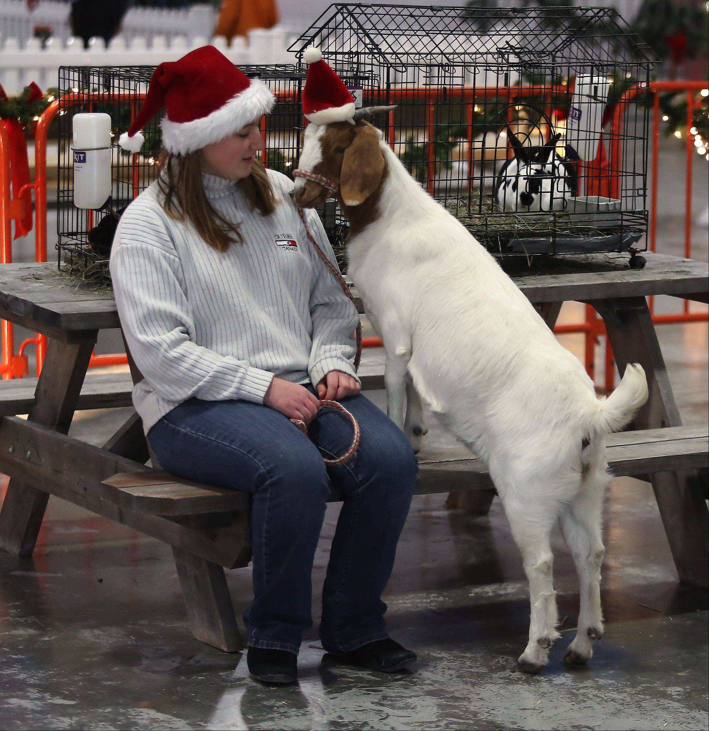 Haley Latona, 15, of Beach Park, wears Santa hats with her Boer goat, Cally, at Santa's Farm during the Holiday Hoedown Monday at the Lake County Fairgrounds in Grayslake. The indoor winter festival included a Magical Midway with carnival rides, Santa's Farm, and holiday crafts.