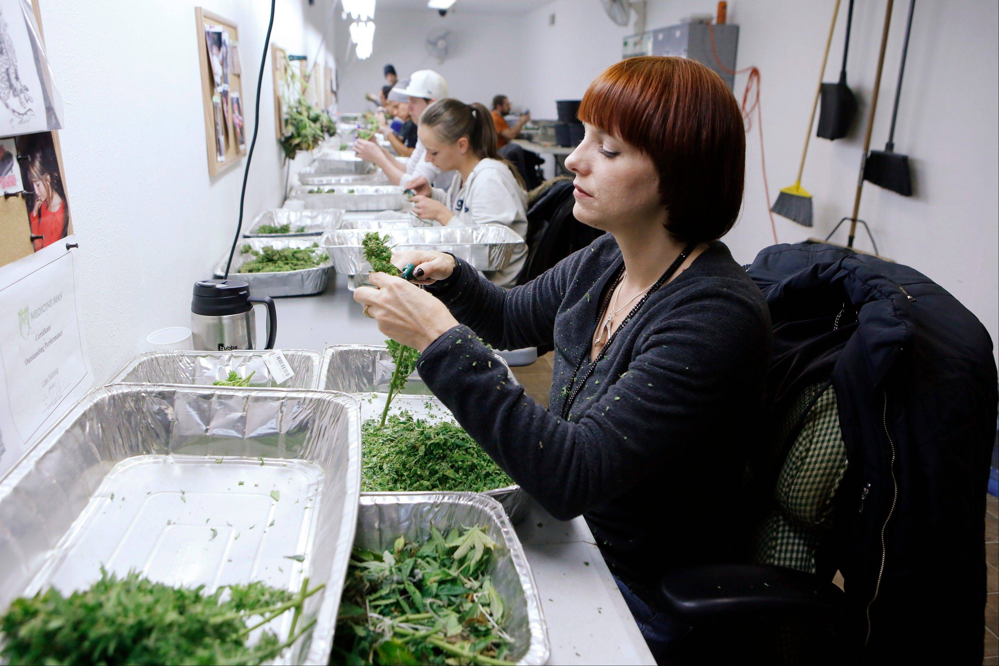 Workers process marijuana in the trimming room at the Medicine Man dispensary and grow operation in northeast Denver. Colorado will be the first state to allow recreational pot sales, beginning Wednesday.
