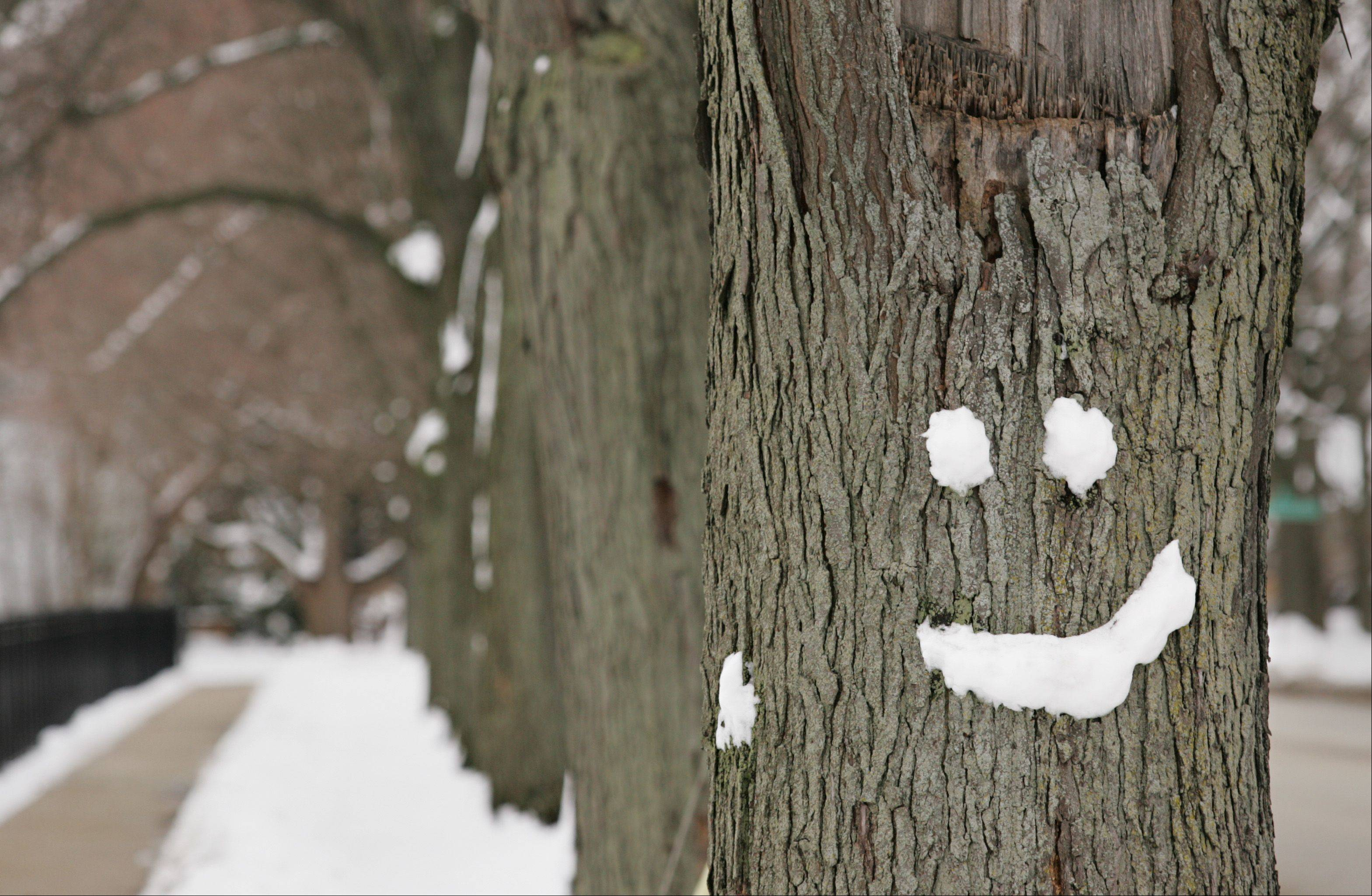 Wet and snowy conditions last February created a perfect opportunity for a budding artist to adorn this tree with a smile along Wing Street in Elgin.