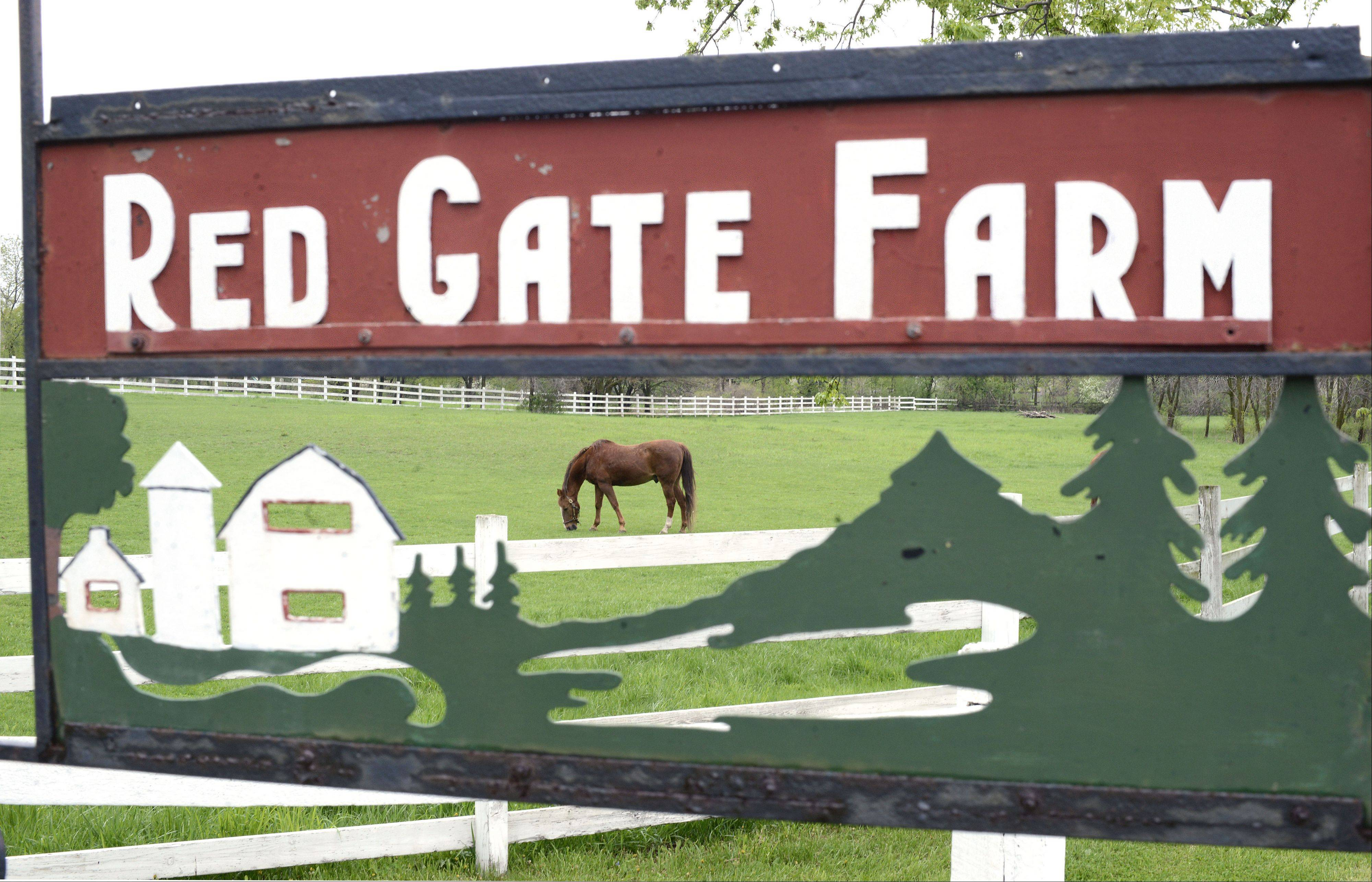 Looking as if it's a part of a decorative sign, a horse grazes in a front pasture at Red Gate Farm along Red Gate Road in St. Charles on Friday, May 10.