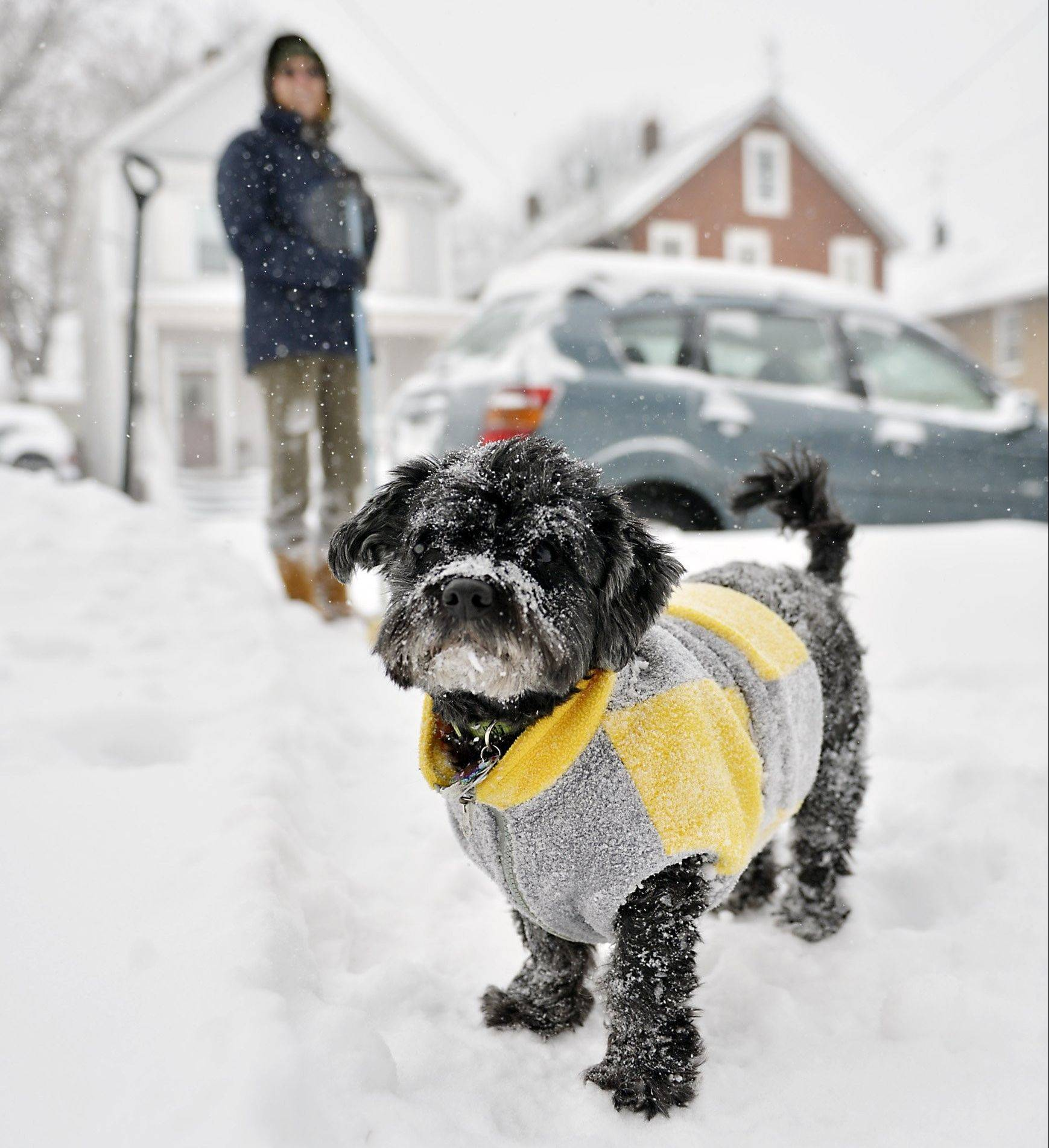 Snow sticks to Nikko's fur and sweater as the 10-year-old Havanese dog plays in the snow with his owner, Laurie Edwards, at rear, outside their house in Erie, Pa., Thursday. A winter storm promising significant snowfall, strong winds and frigid air bore down Thursday on the Northeast.